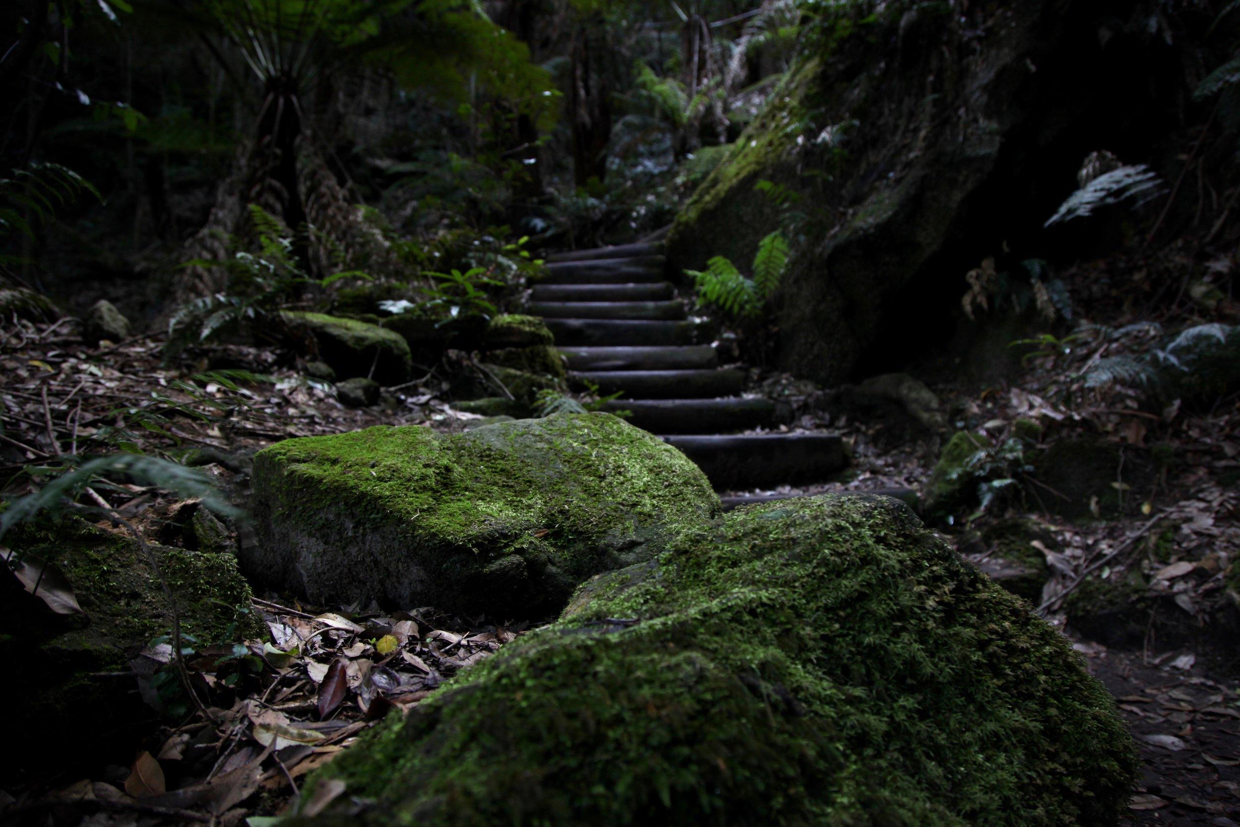 leura-forest-jamison-valley.jpg