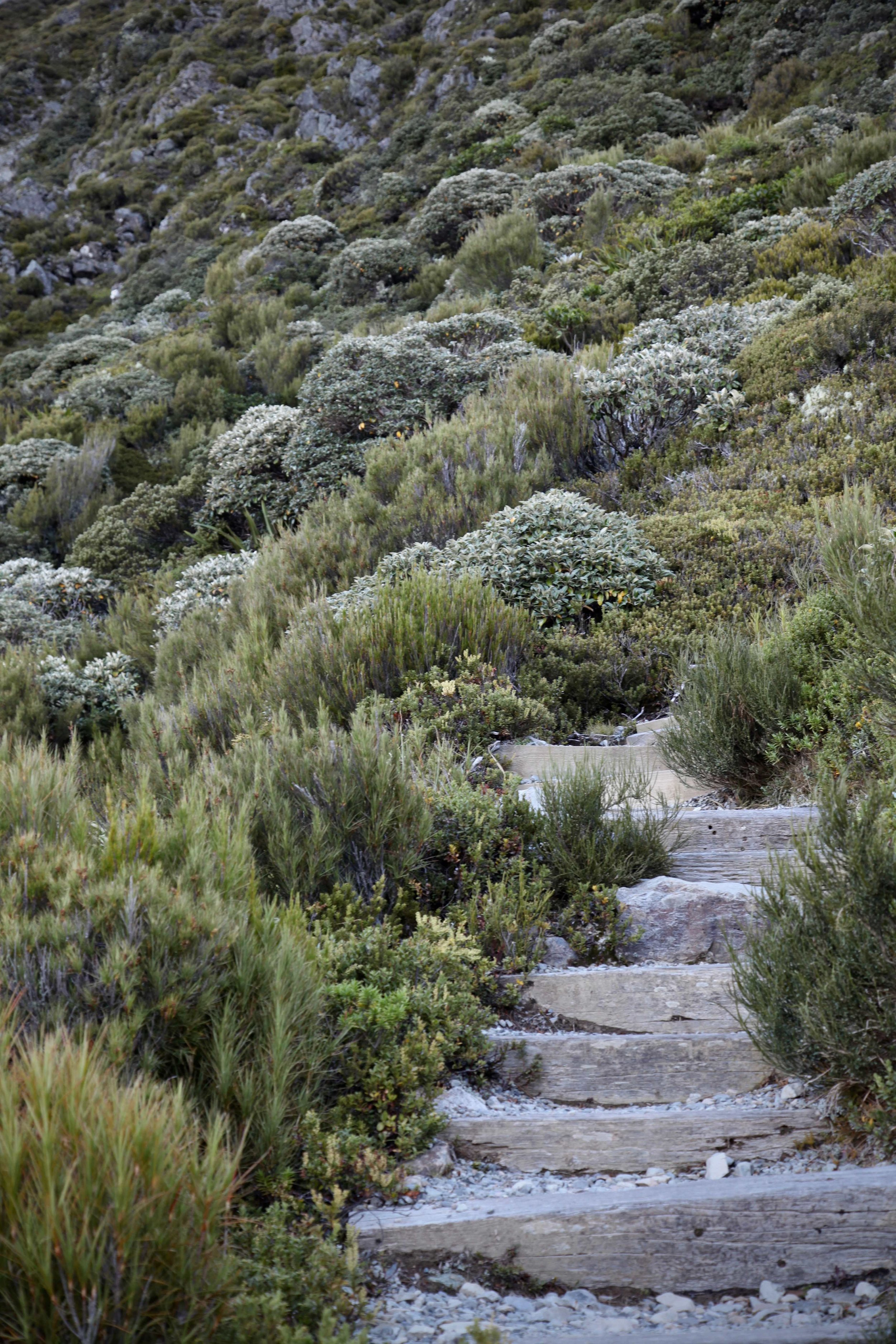 Just a few of the thousands of steps on the Sealy Tarns track.
