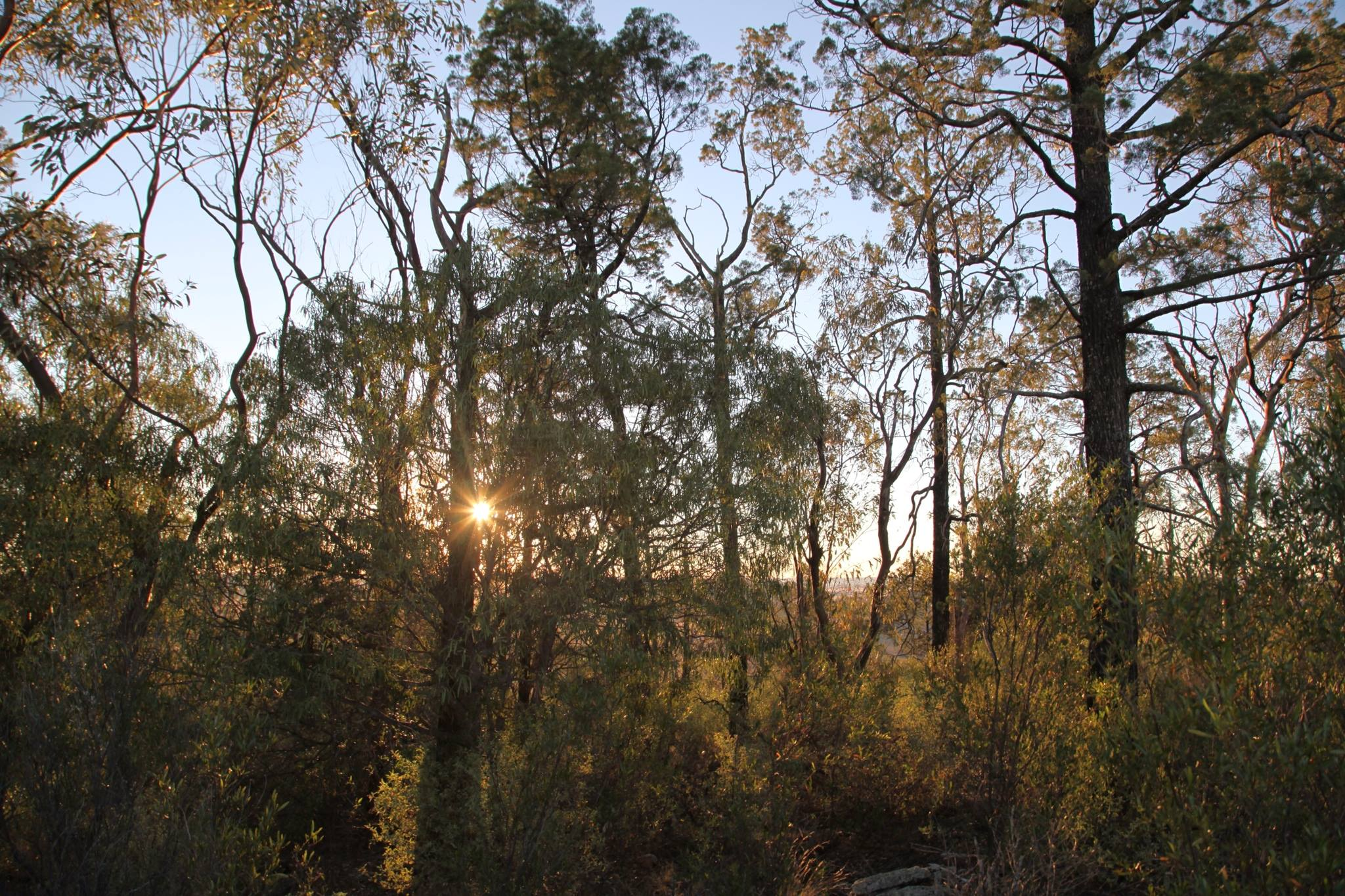 sunset-leard-forest.jpg