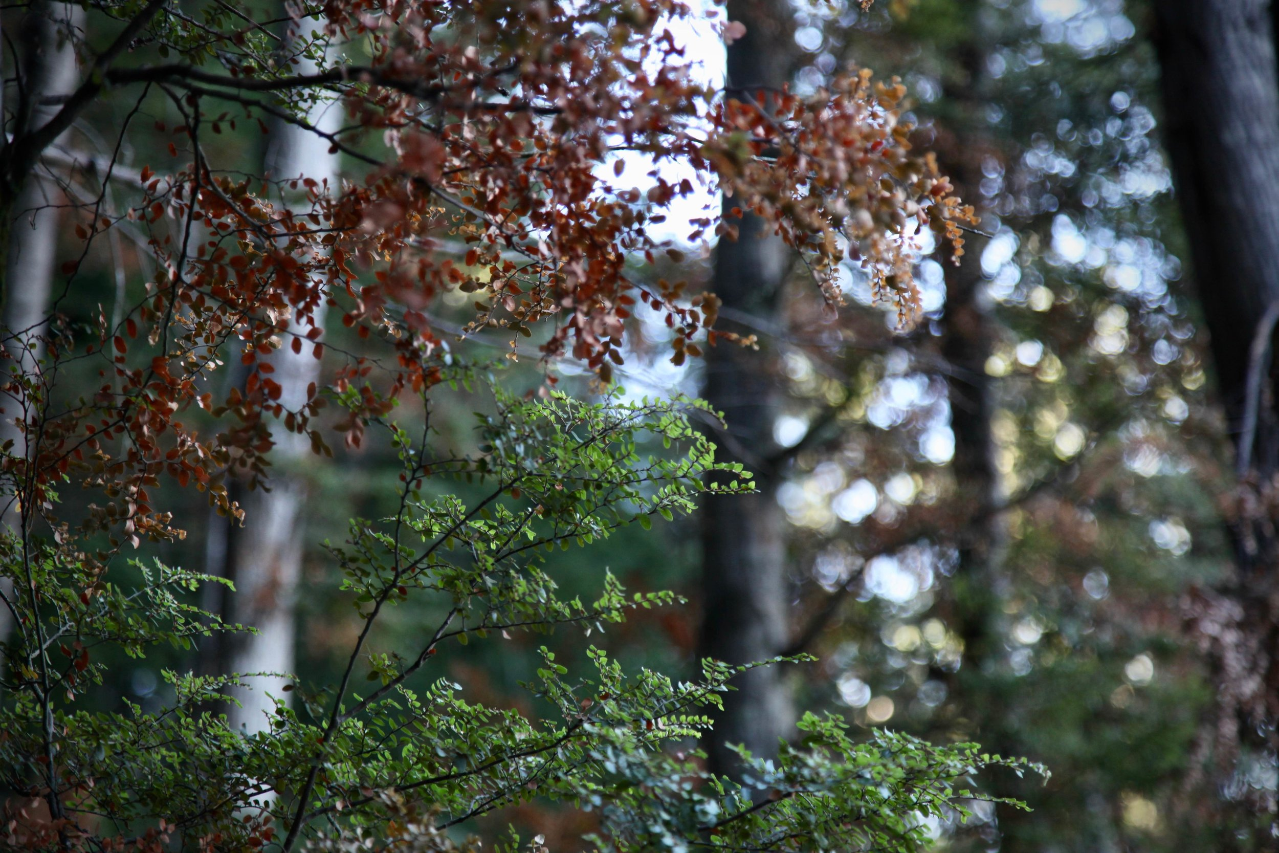 queenstown-tiki-trail.jpg