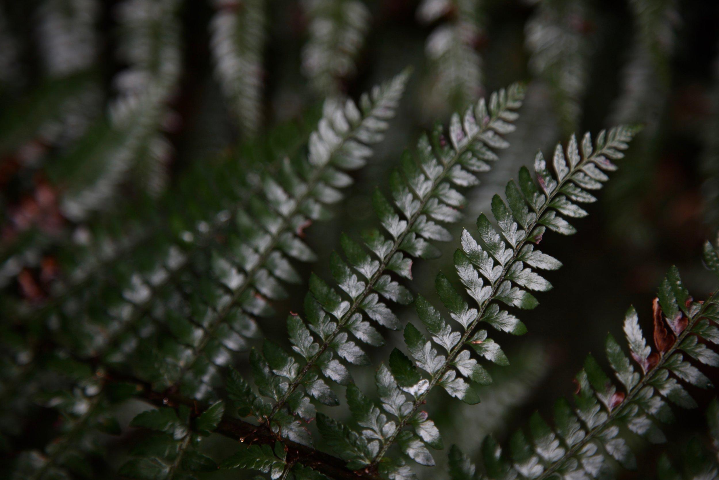 dandenong-ranges-fern.jpg