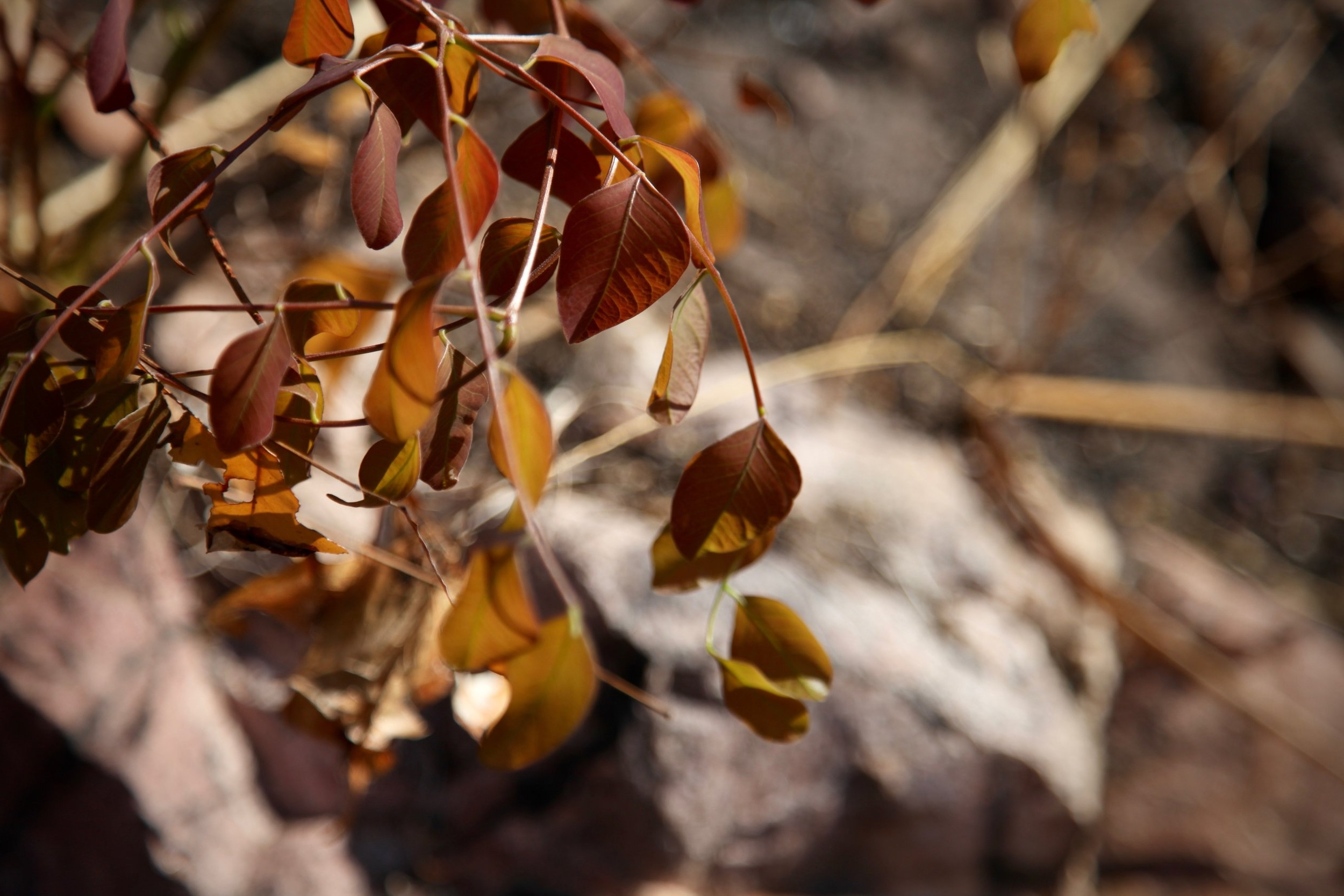 leafs-litchfield.jpg