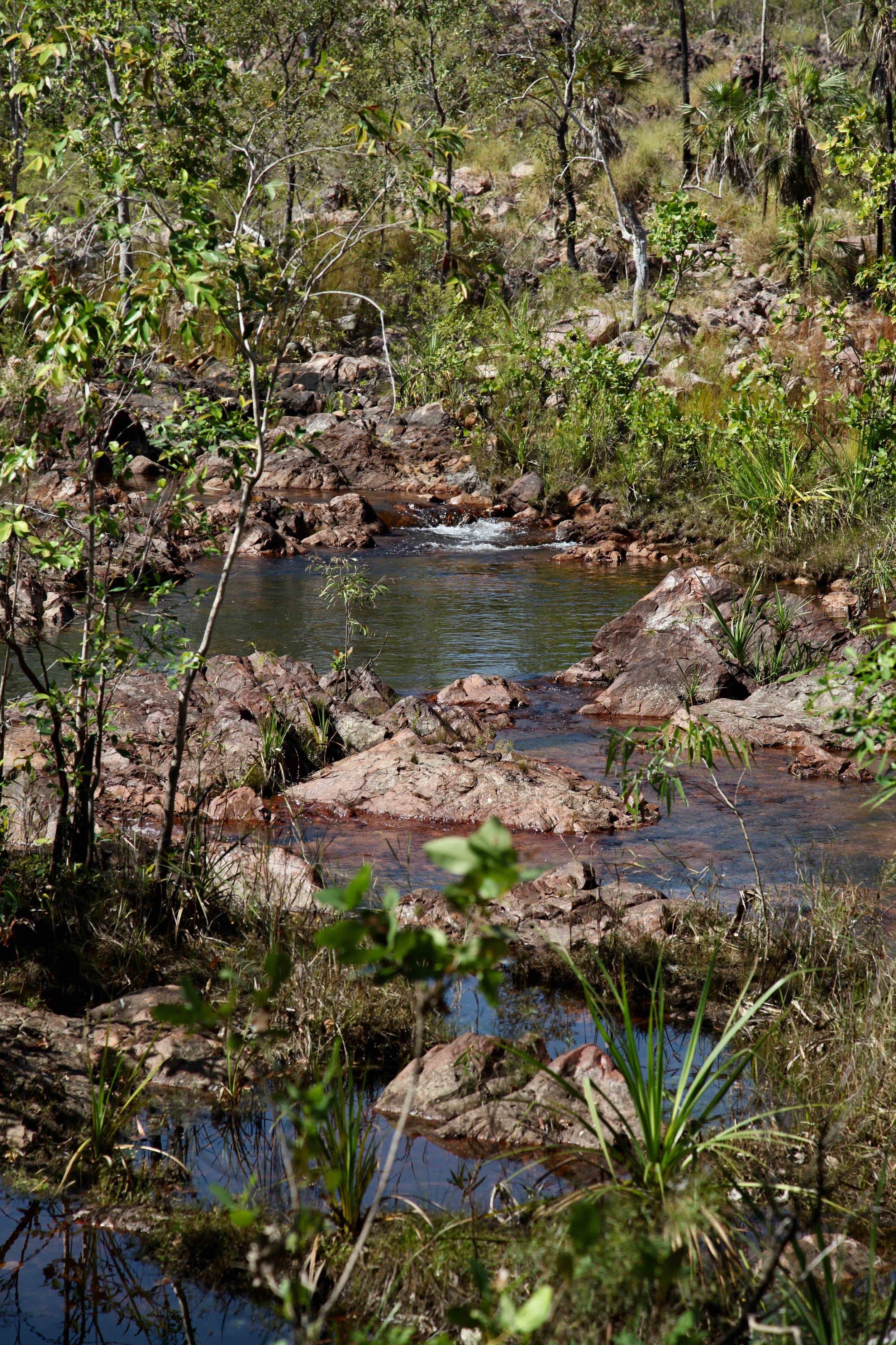 litchfield-national-park-water.jpg