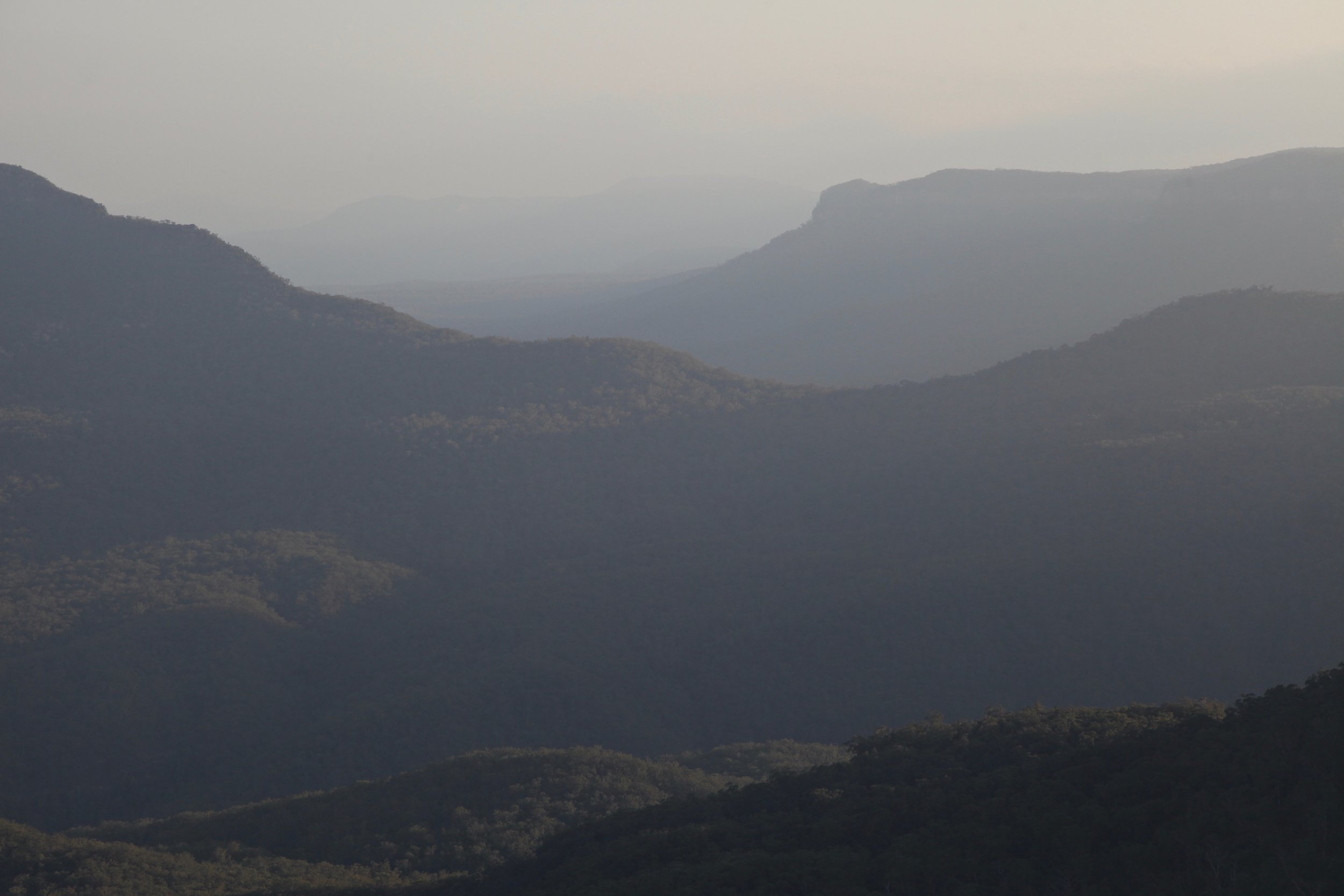 Afternoon golden hour light in the Blue Mountains.