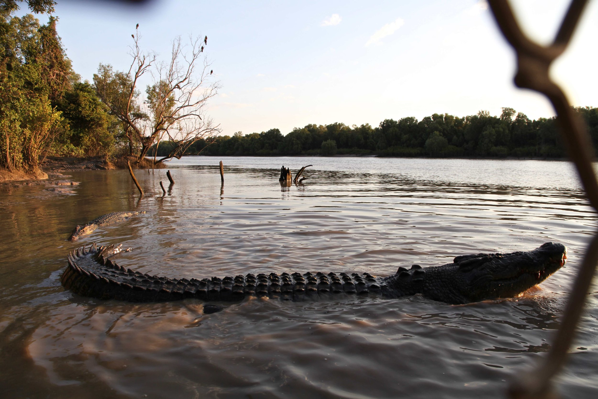 There he is — crocodiles in the Adelaide River.