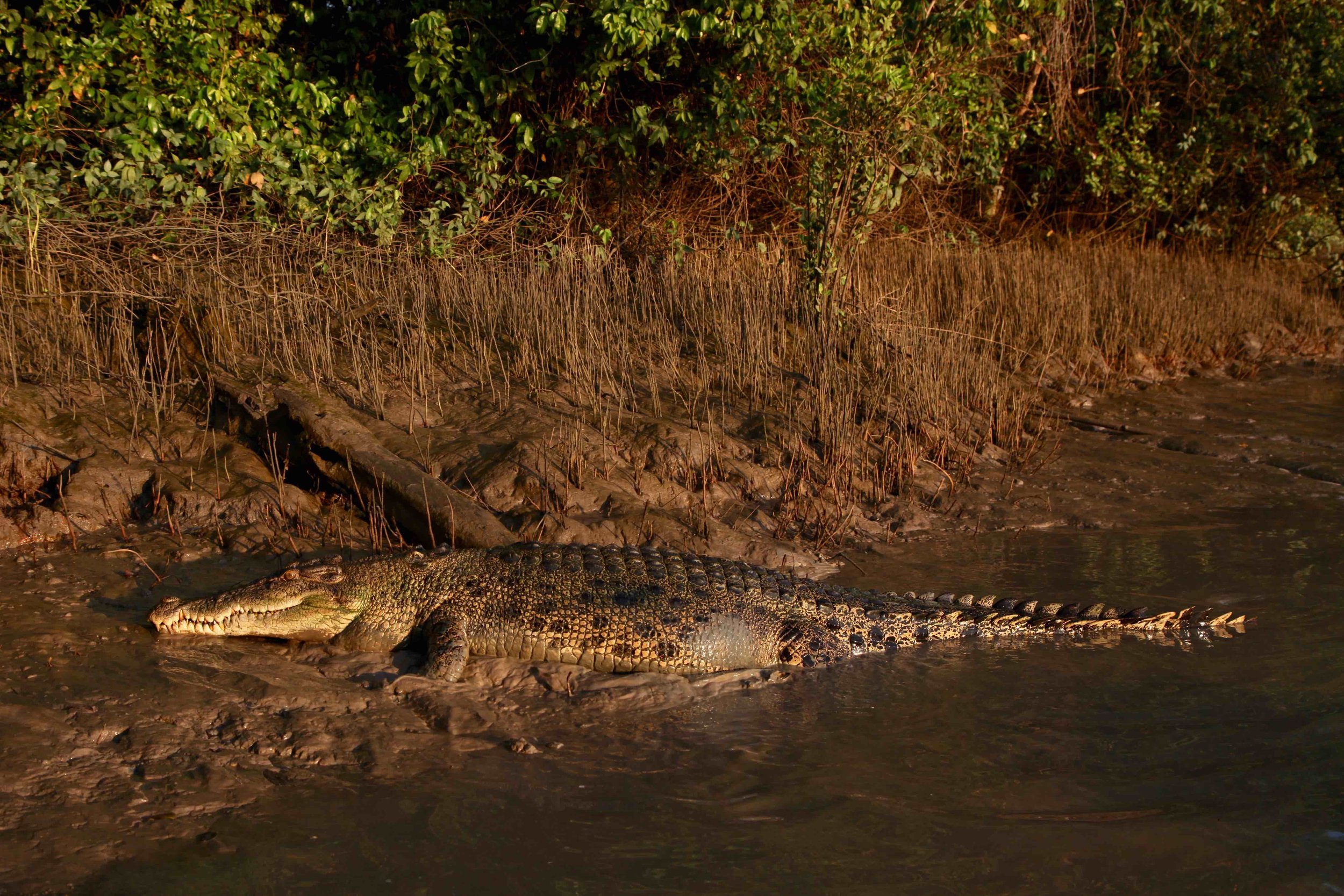 Golden hour light makes everything look magic, even the crocs.