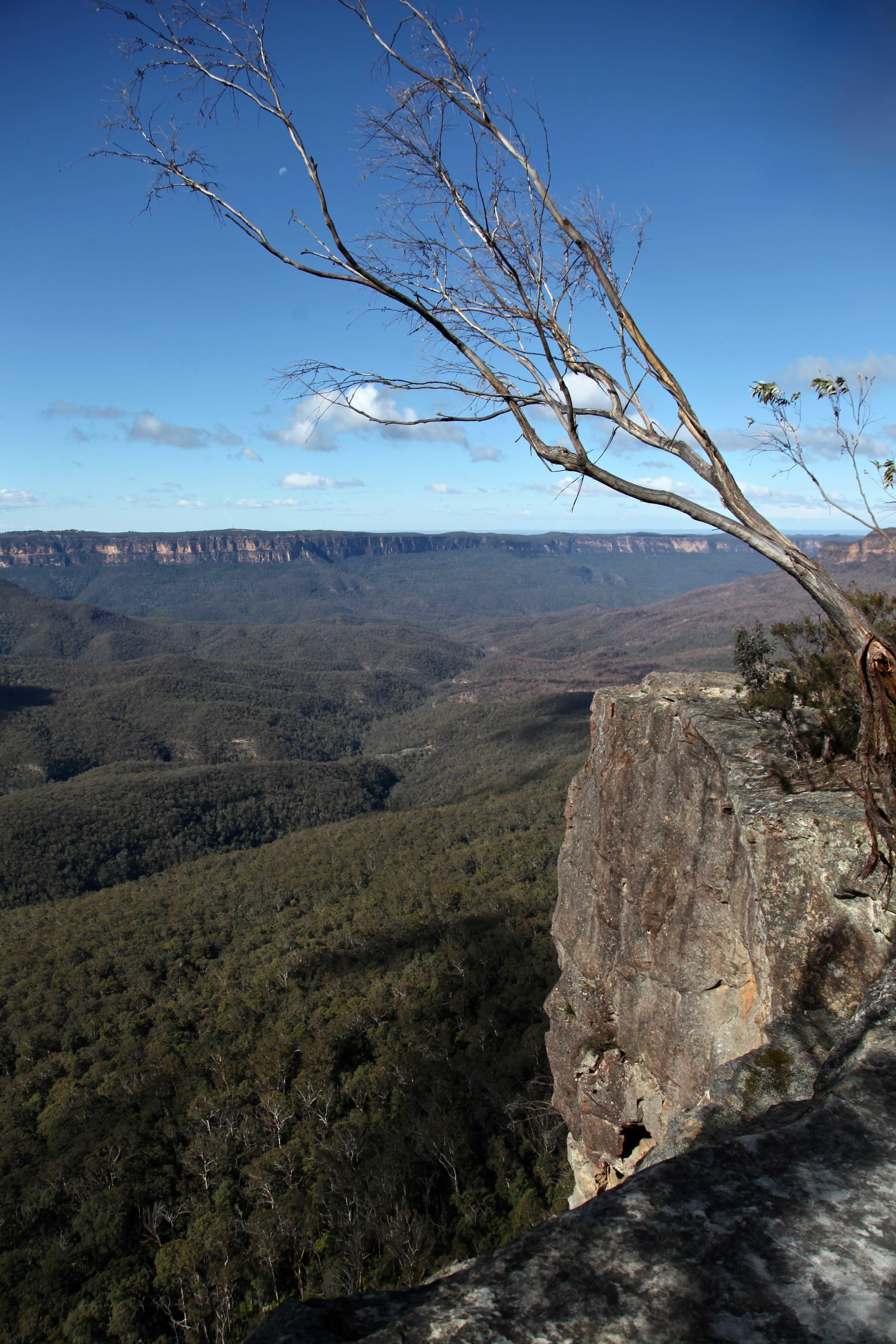 The Castle Head track is a 2.5km walk starting from Narrow Neck in the Blue Mountains.
