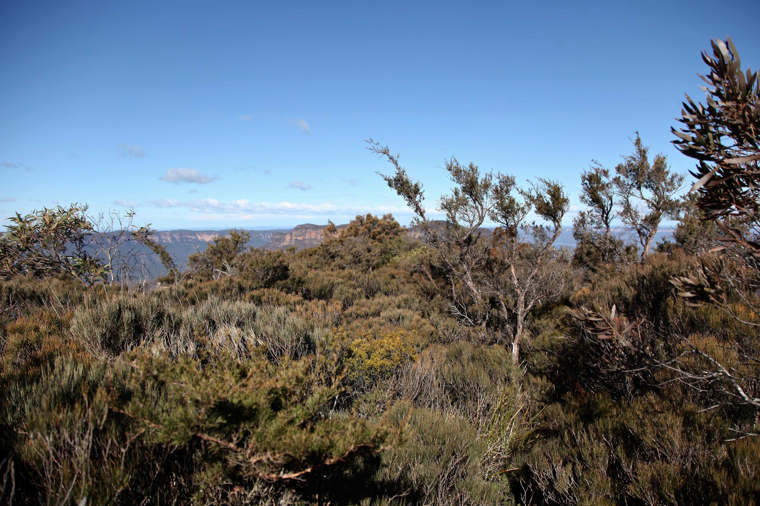 Castle Head track at Katoomba in the Blue Mountains.