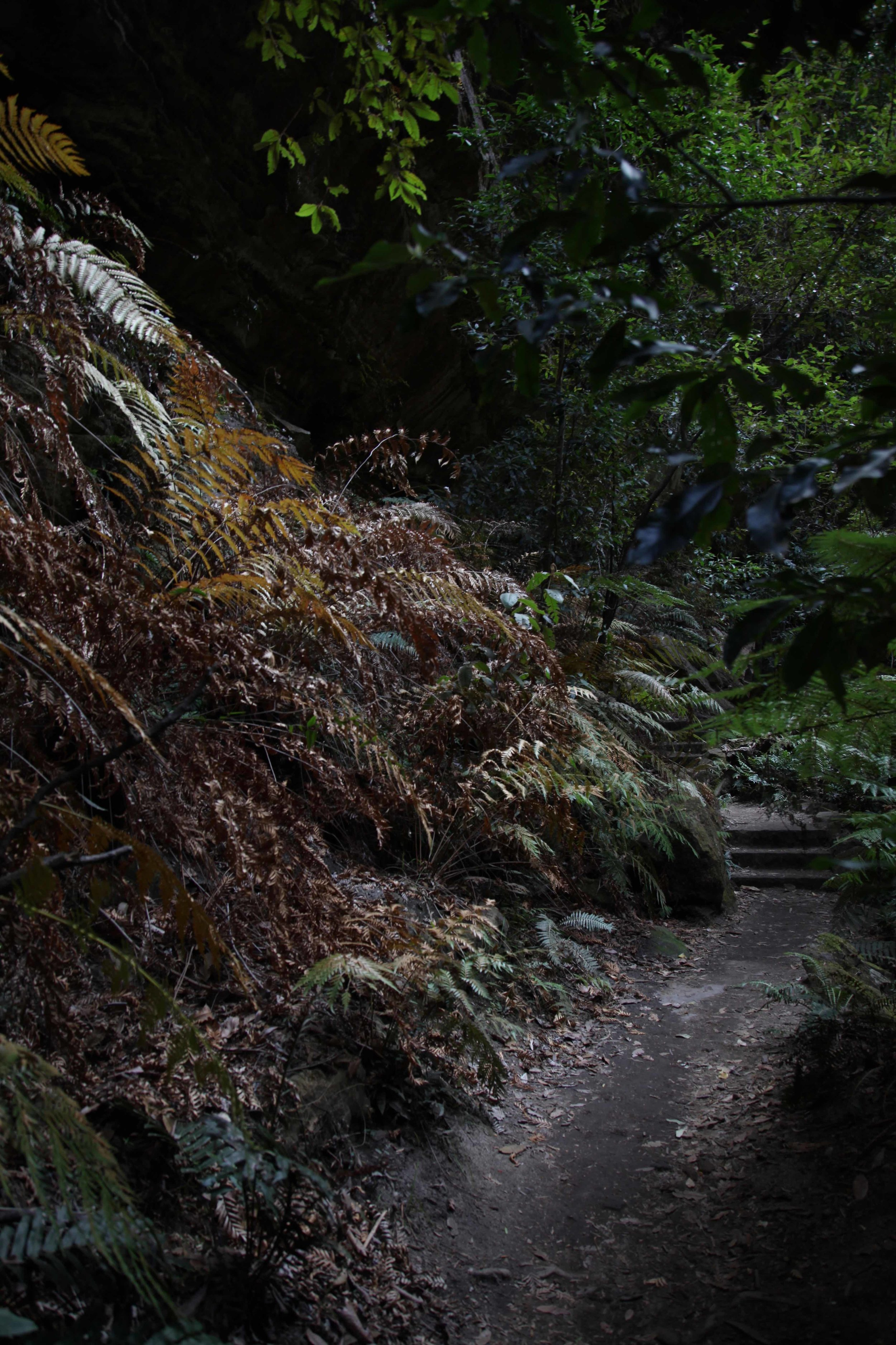 The Grand Canyon loop track at Blackheath in the Blue Mountains.