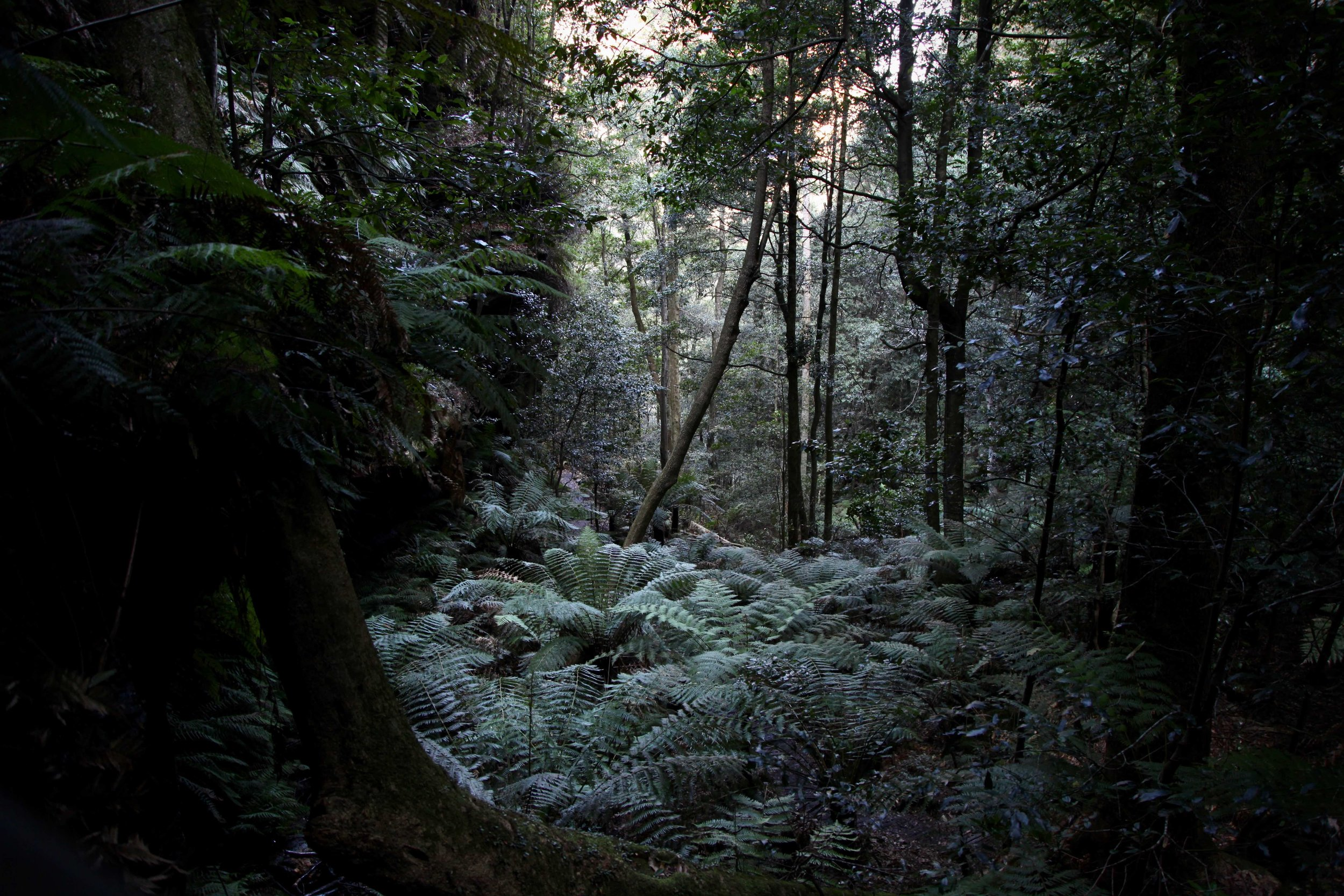 Hiking through Leura Forest you'll spot plenty of mossy trees and ferns, and you might spot Lyrebirds too, before arriving at the cascades.