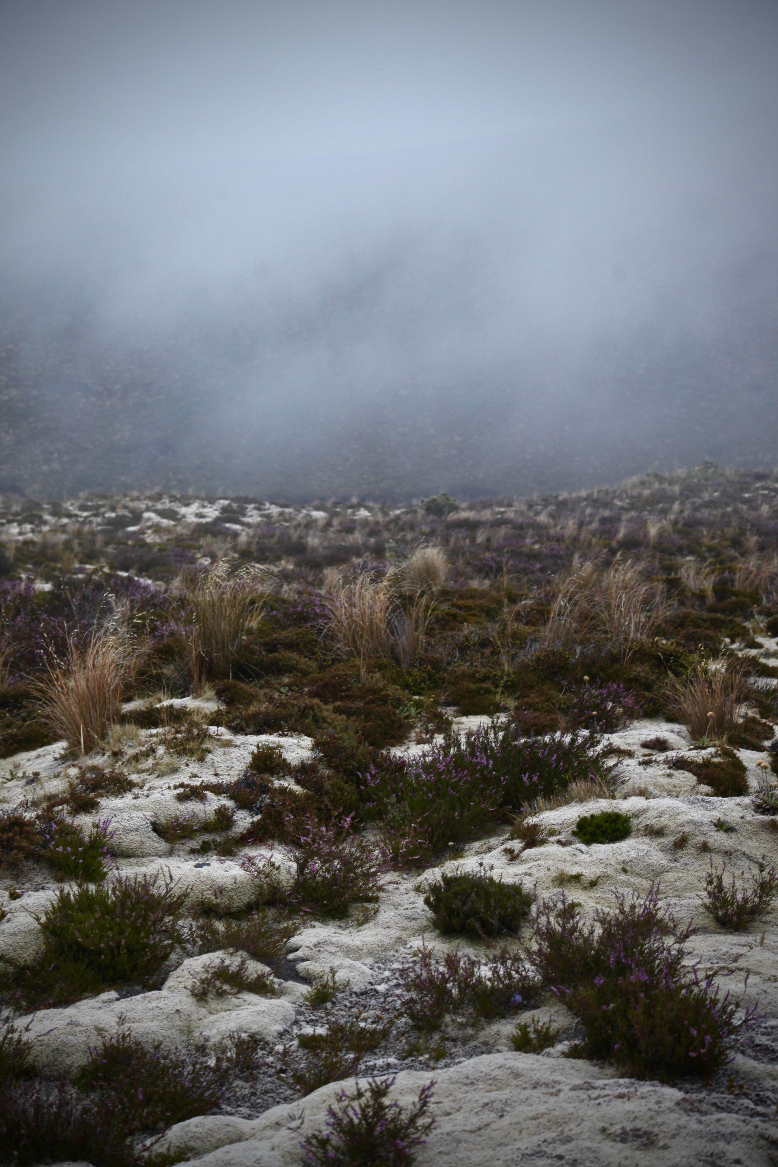 tongariro-alpine-crossing-hike.jpg