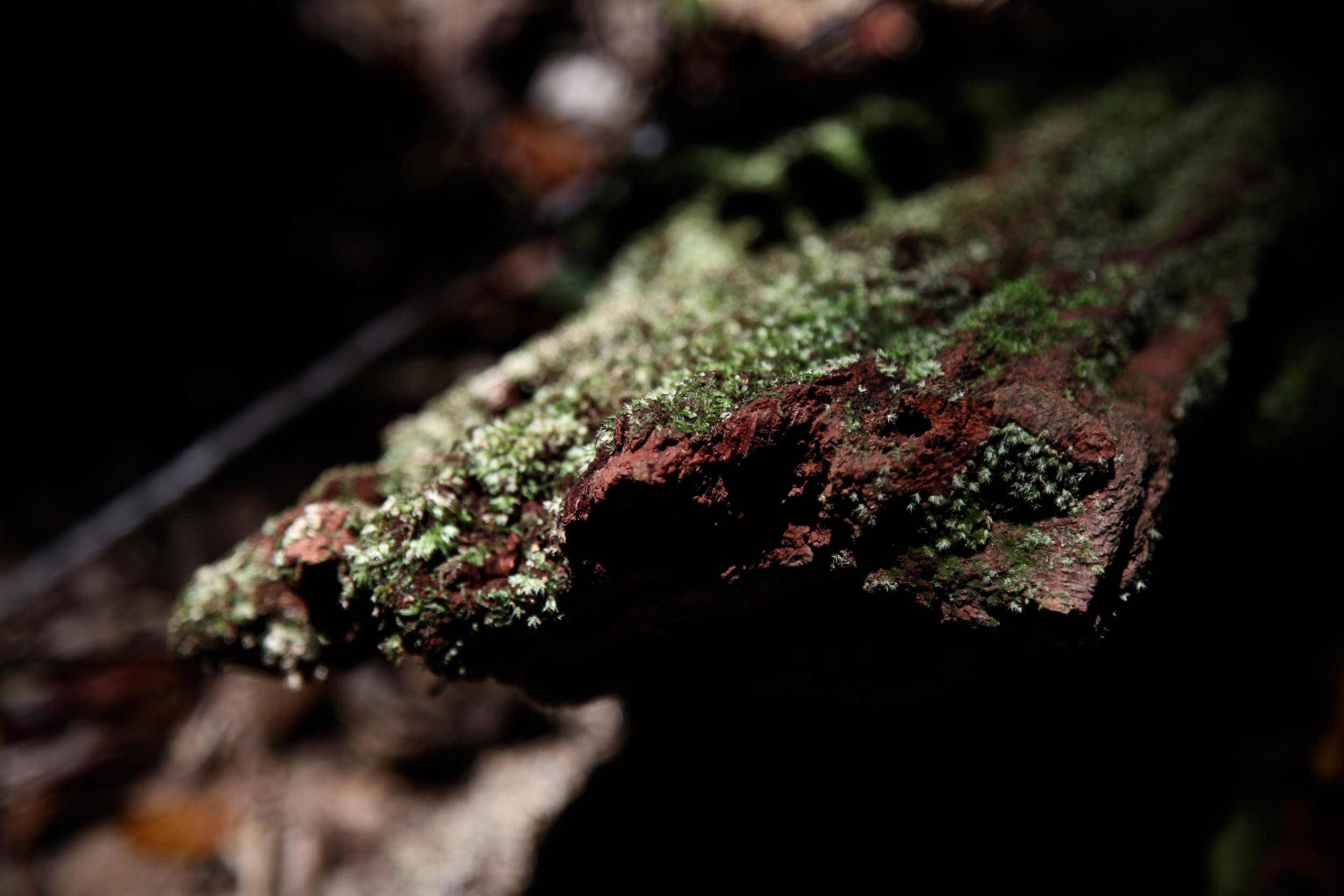 nature-hike-noumea.jpg