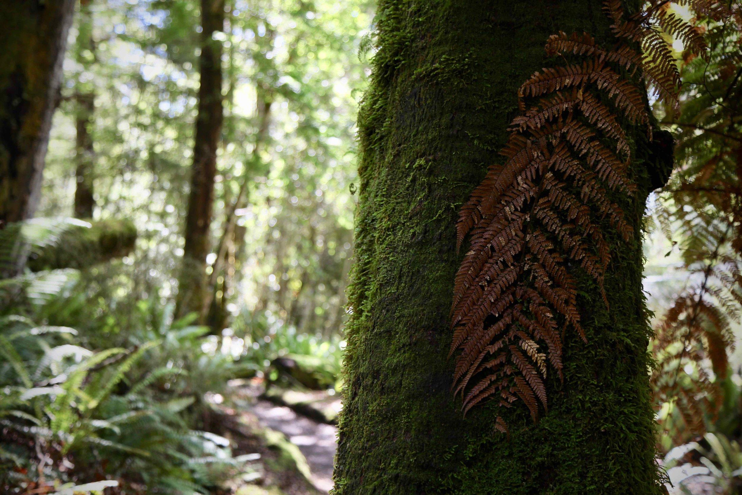 kepler-track-tree-fiordland.jpg