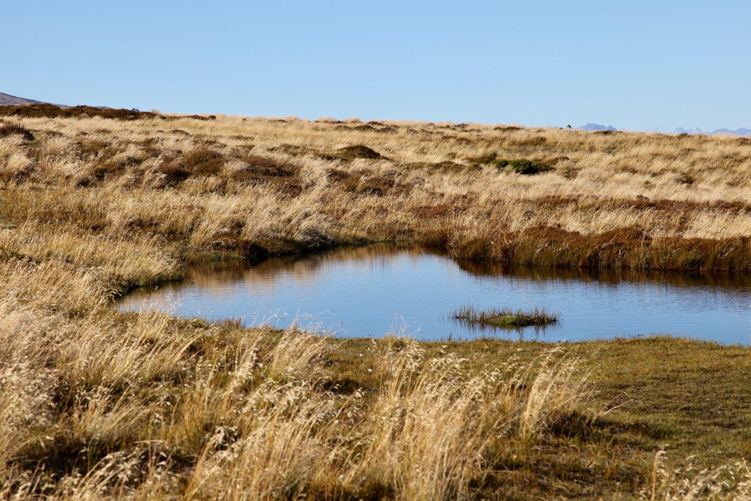 kepler-track-fiordland-golden-hour.jpg