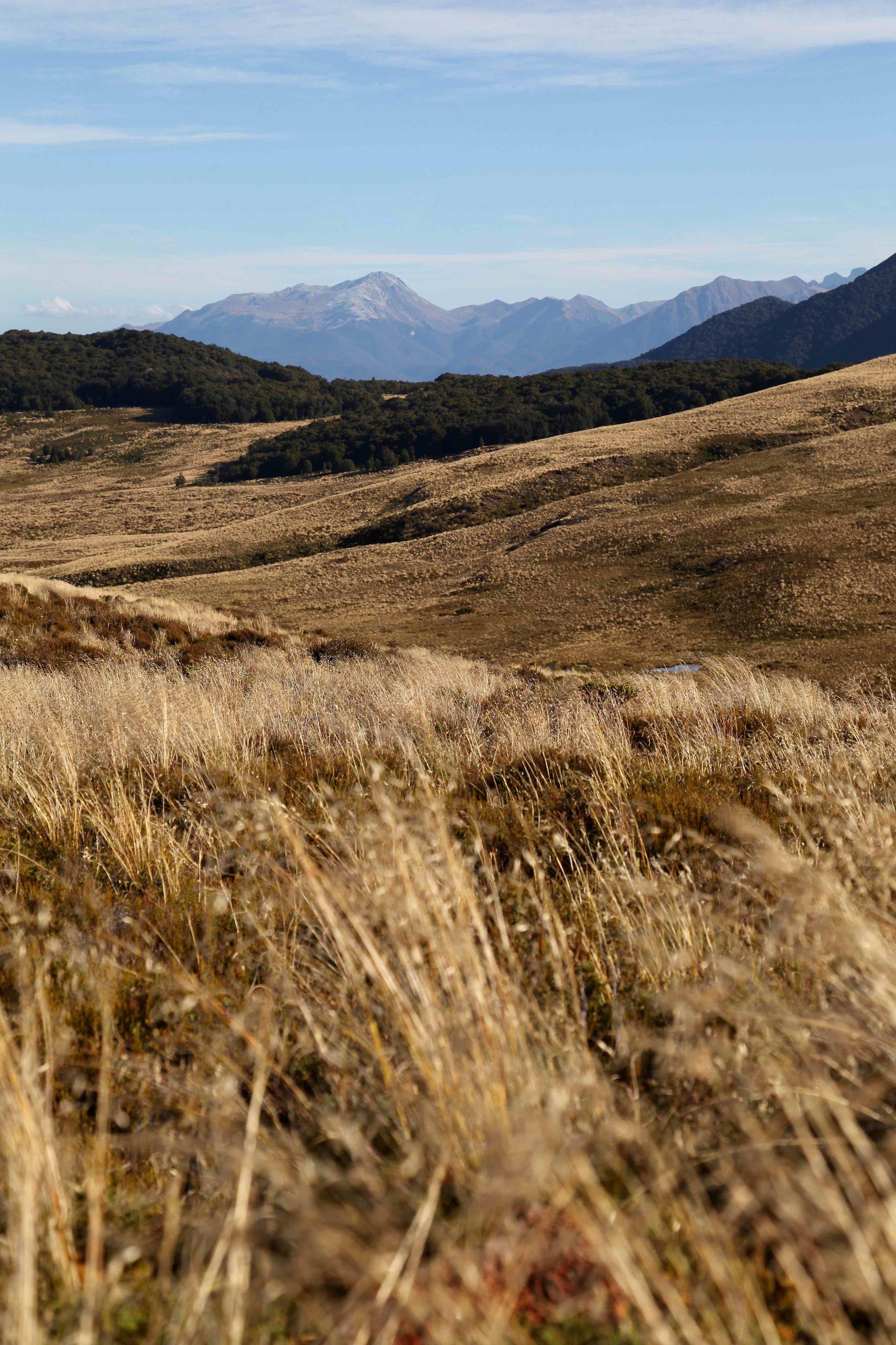 kepler-track-fiordland-new-zealand-great-walk.jpg