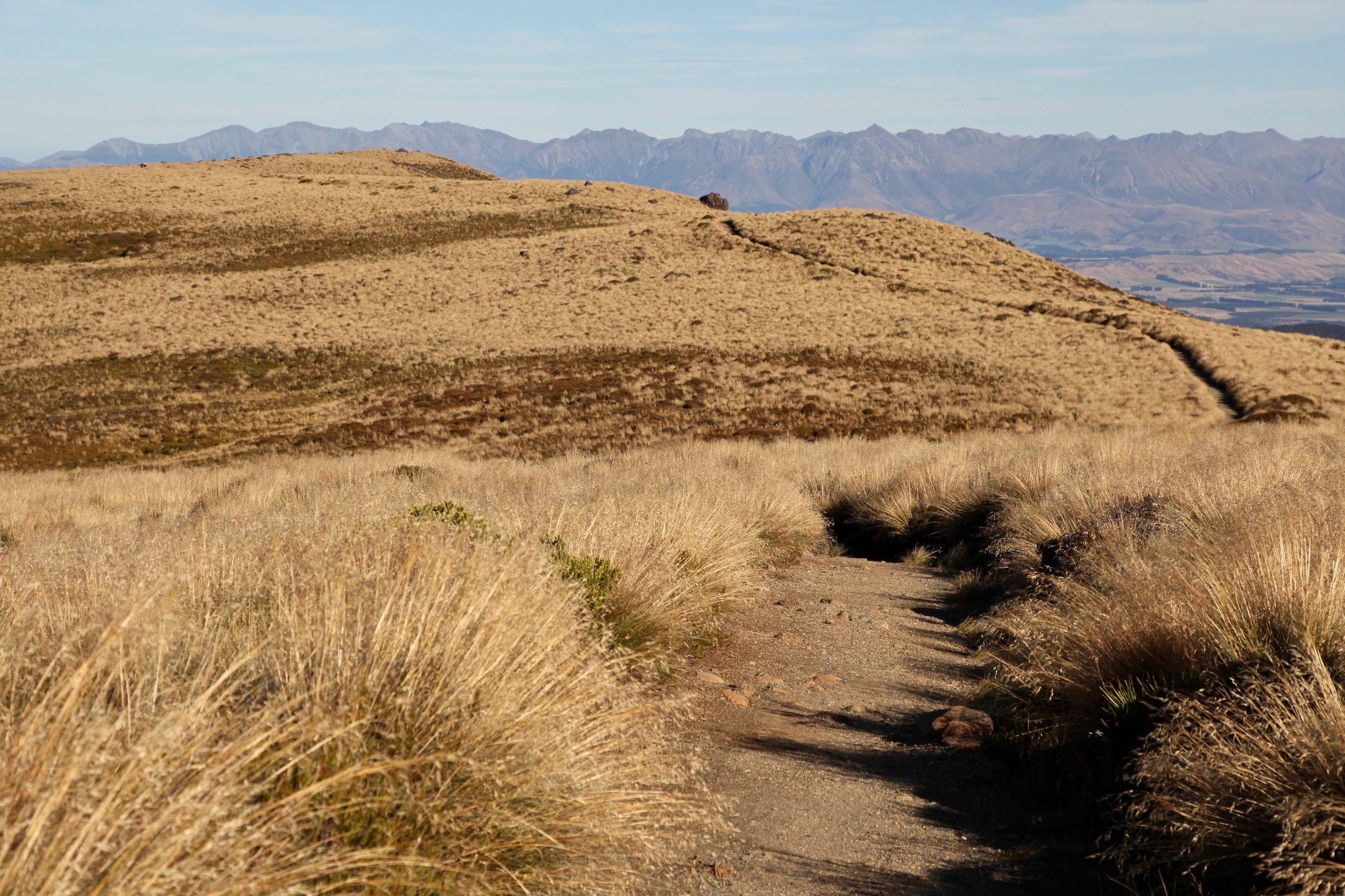 kepler-track-great-walk.jpg