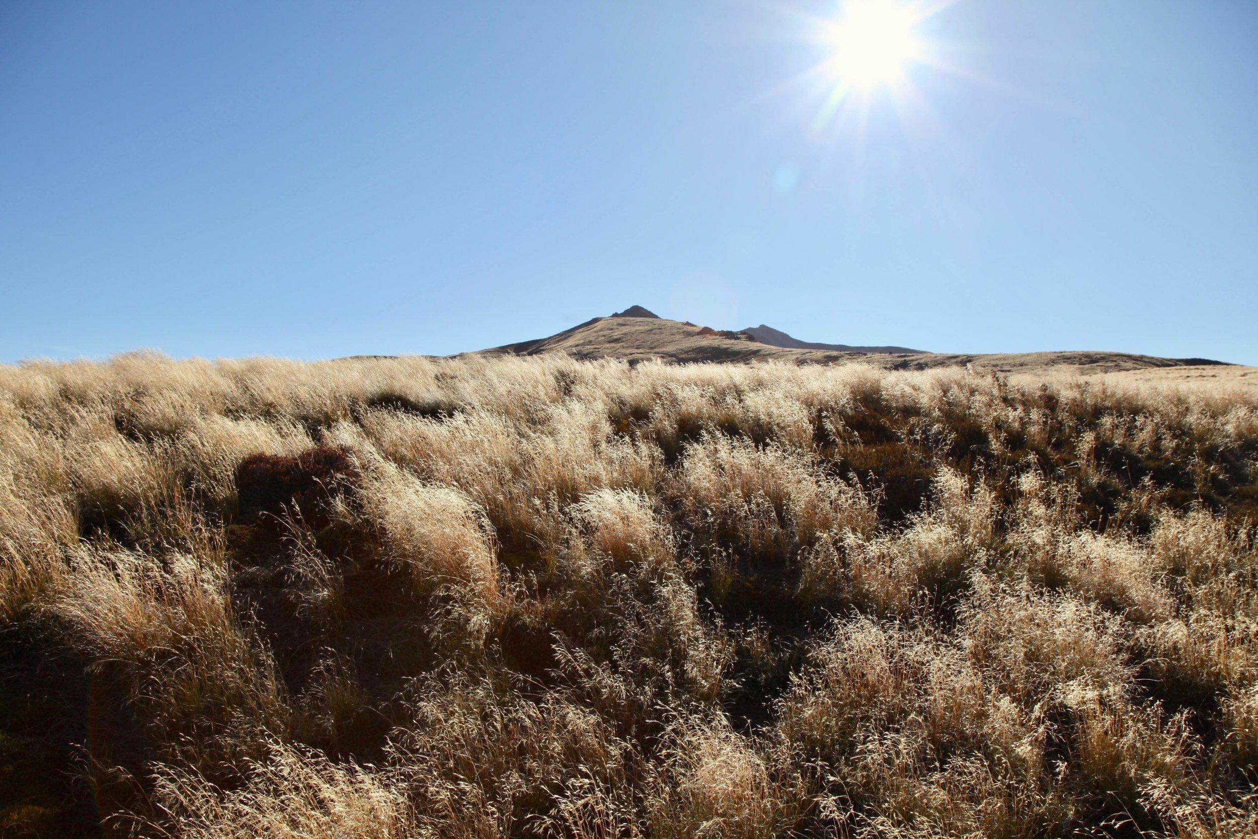 afternoon-hiking-kepler-track.jpg
