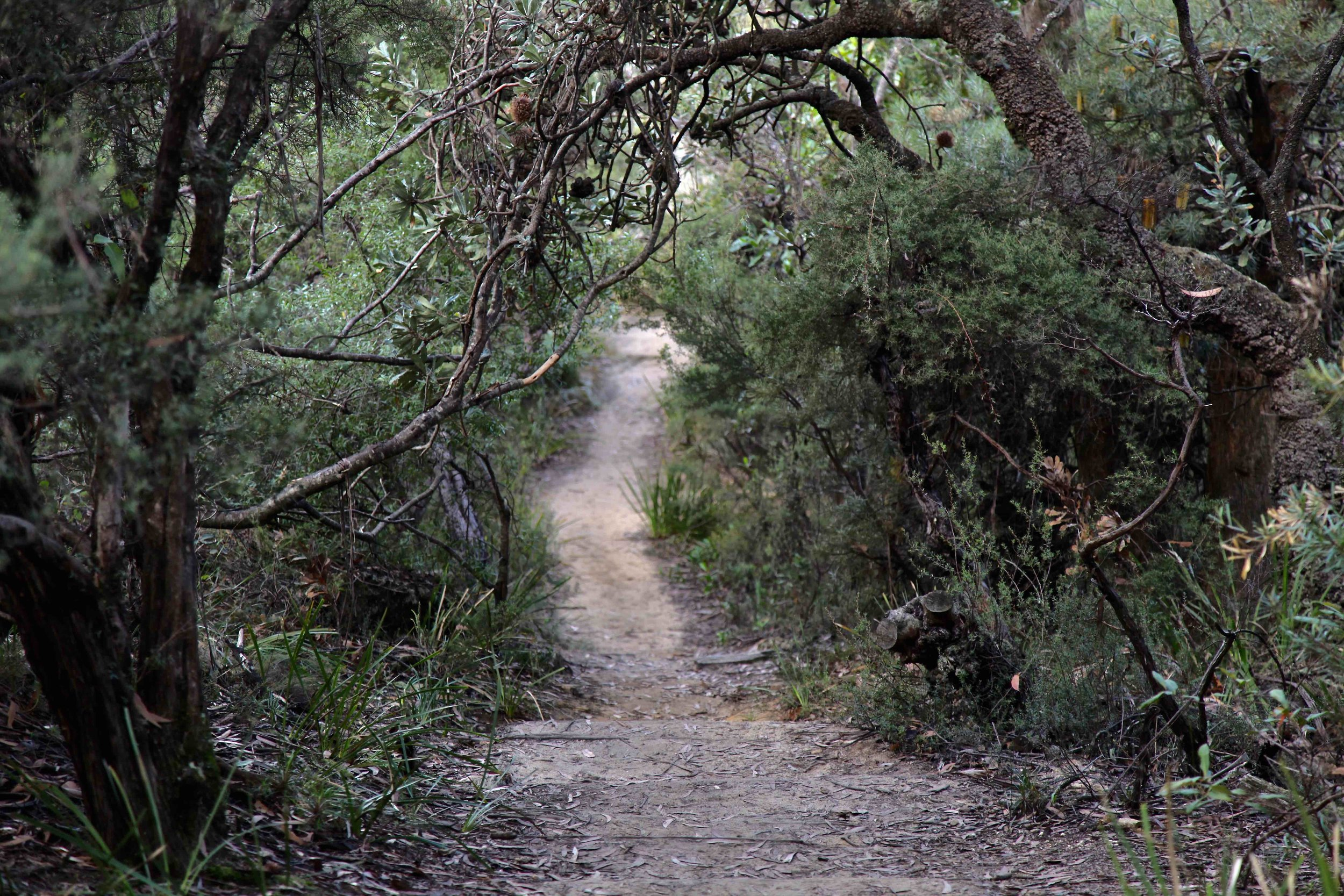 The Prince Henry Cliff walk is a 7km track in the Blue Mountains.