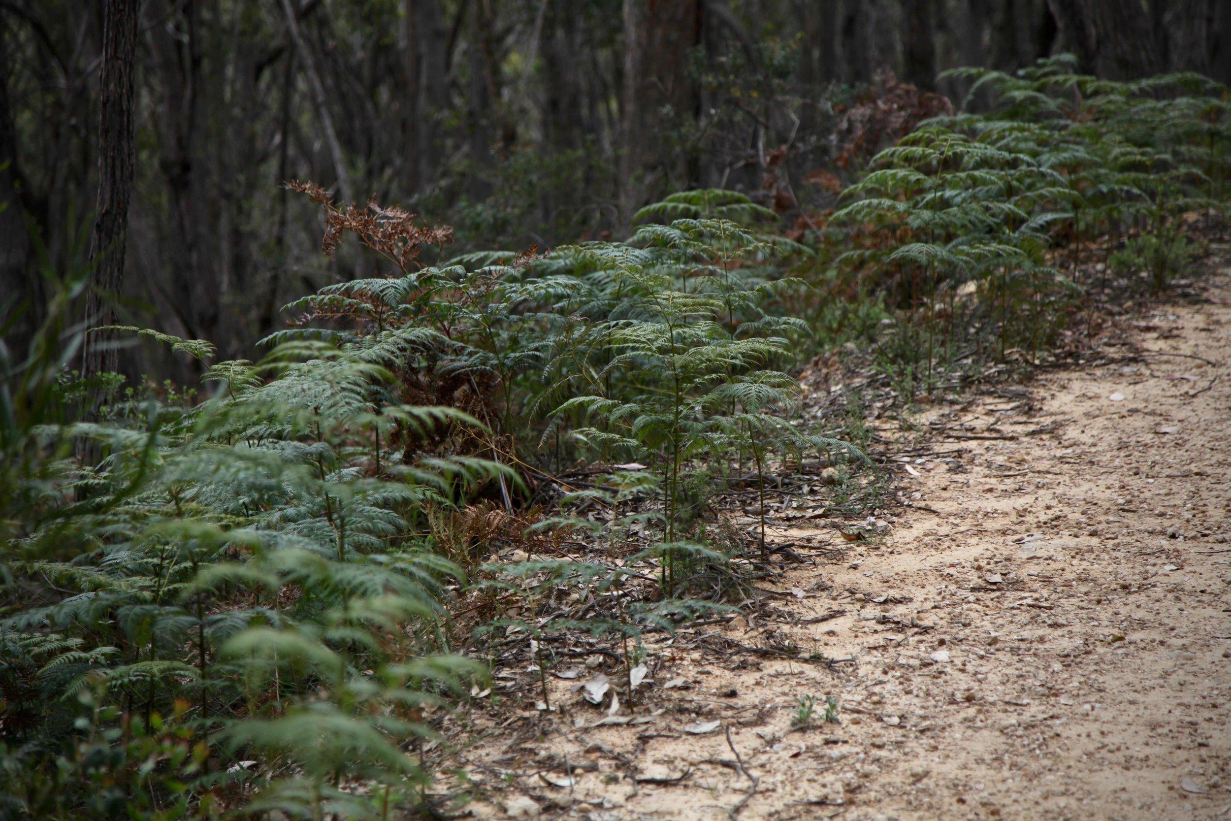 adelaide-mt-lofty-hike.jpg