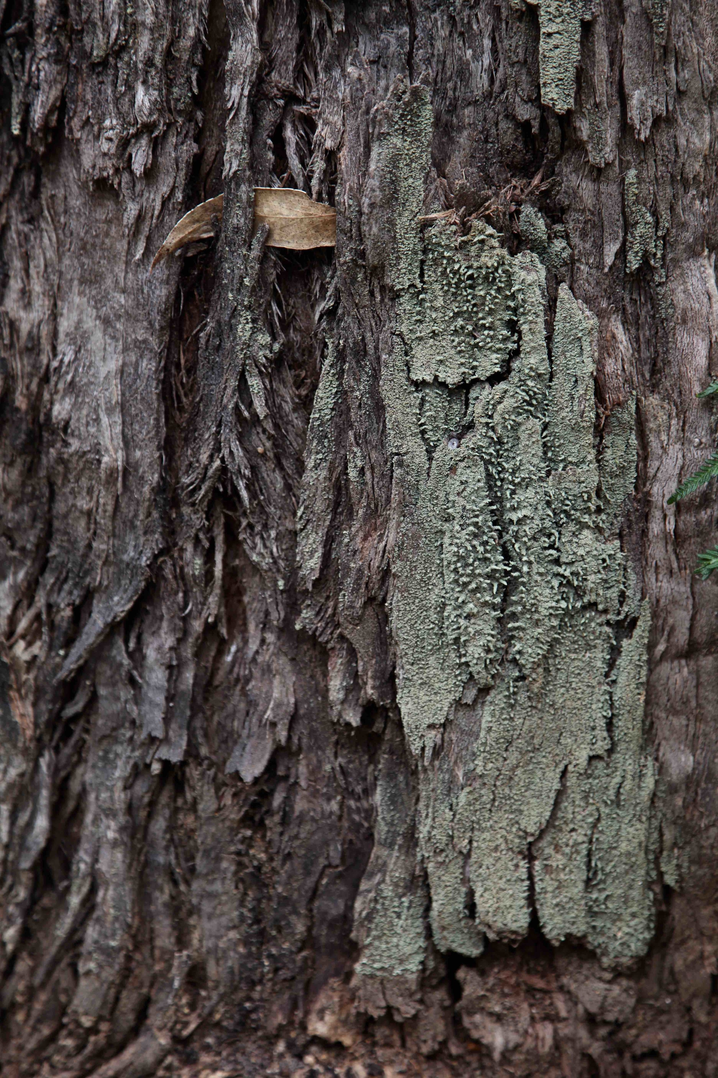 adelaide-bark-hike.jpg