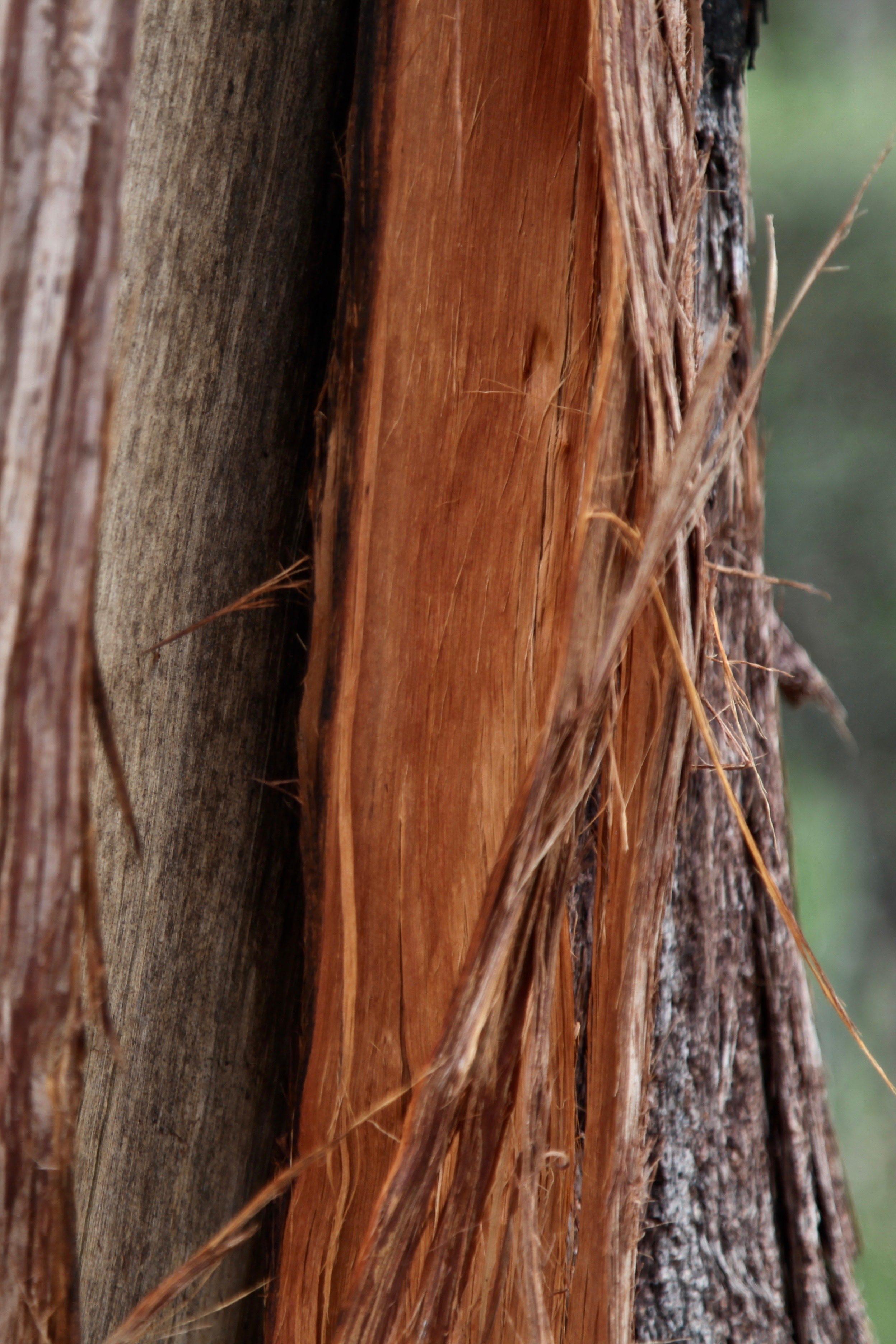 adelaide-mt-lofty-tree-bark.jpg