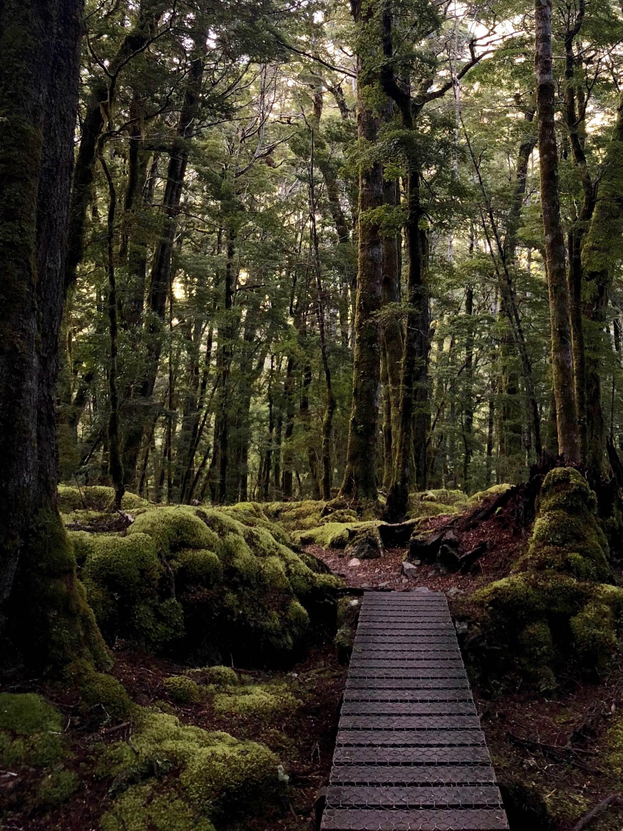 kepler-track-fiordland.jpg