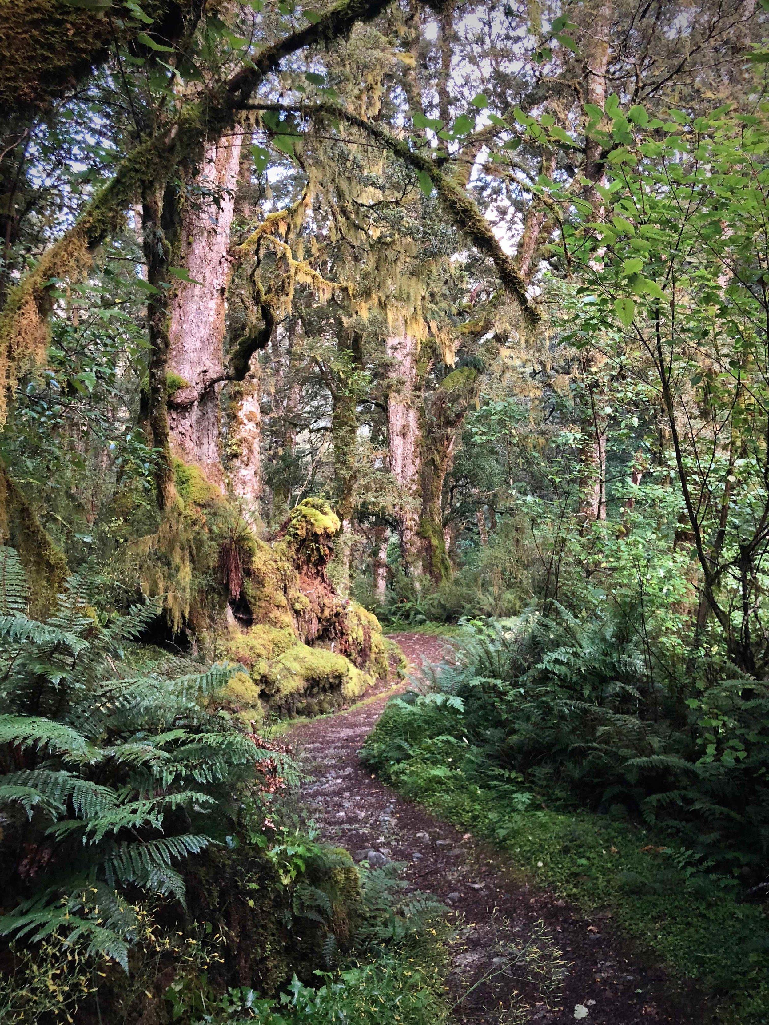 kepler-track-fiordland-new-zealand-hike.jpg