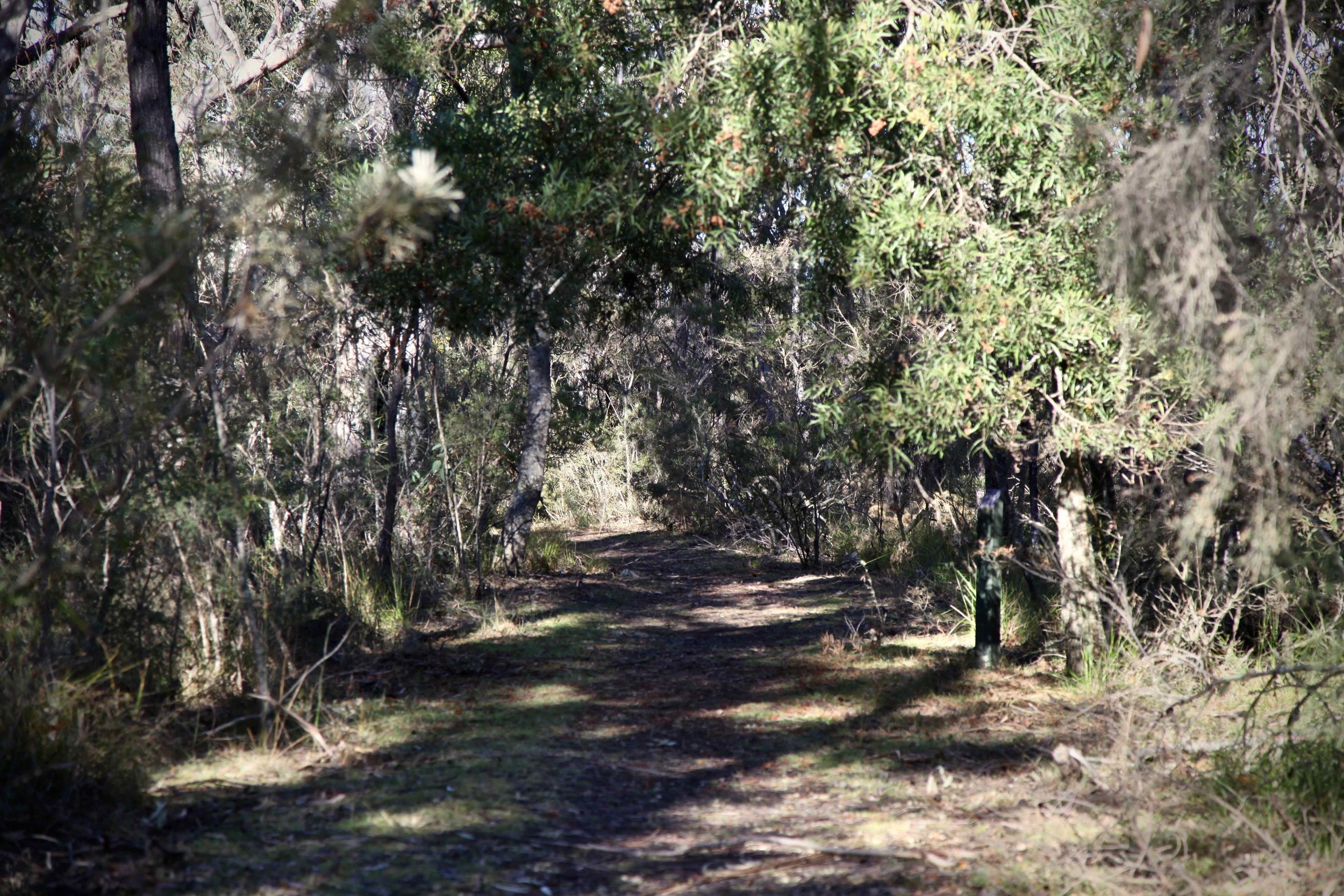 Erith coal mine loop track at Bundanoon.
