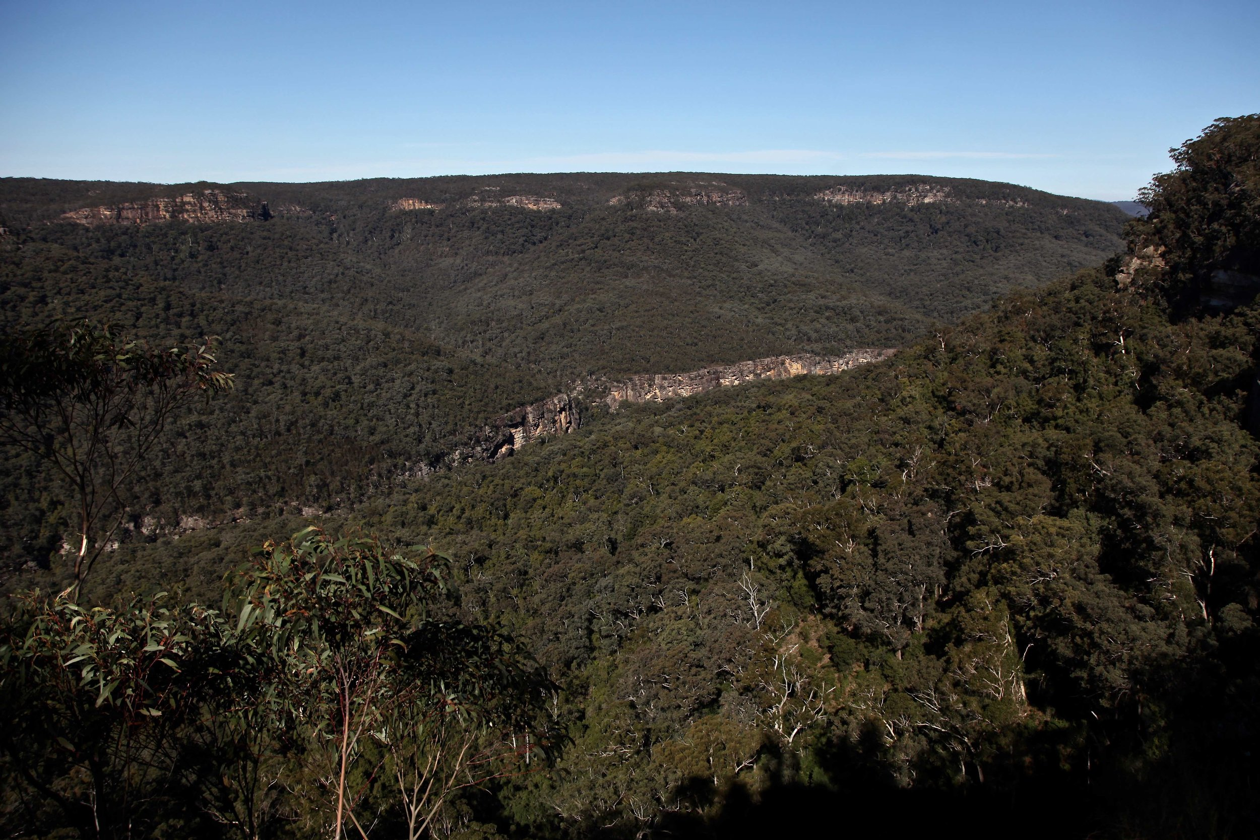 Lush view from the Grand Canyon lookout near Sunrise Point in Morton National Park.