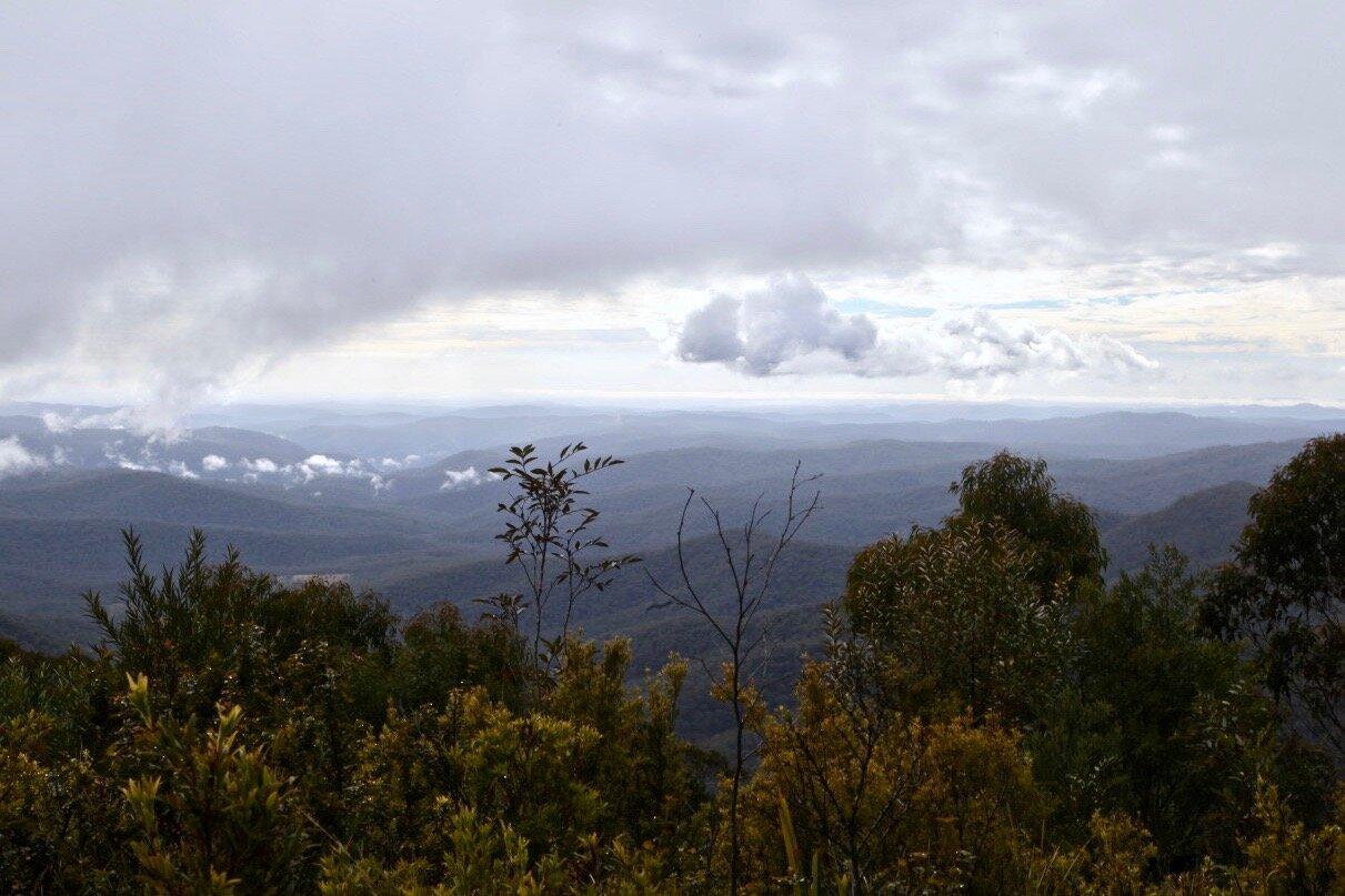 Mt Hyland Nature Reserve is part of the World Heritage Gondwana Rainforests of Australia.