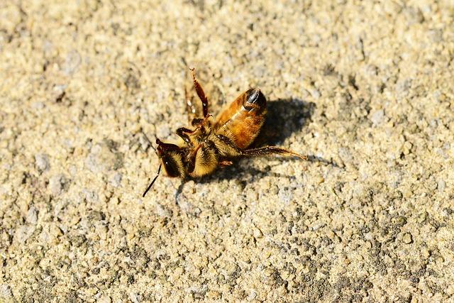 honey-bee-401224_640.jpg