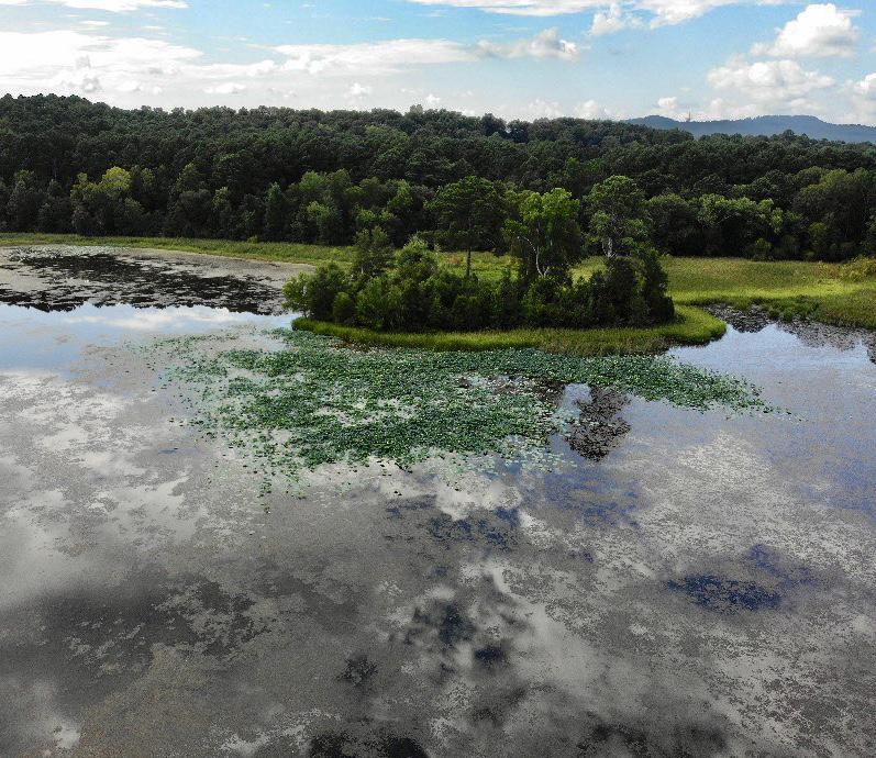 Goose Pond Colony 4.jpg