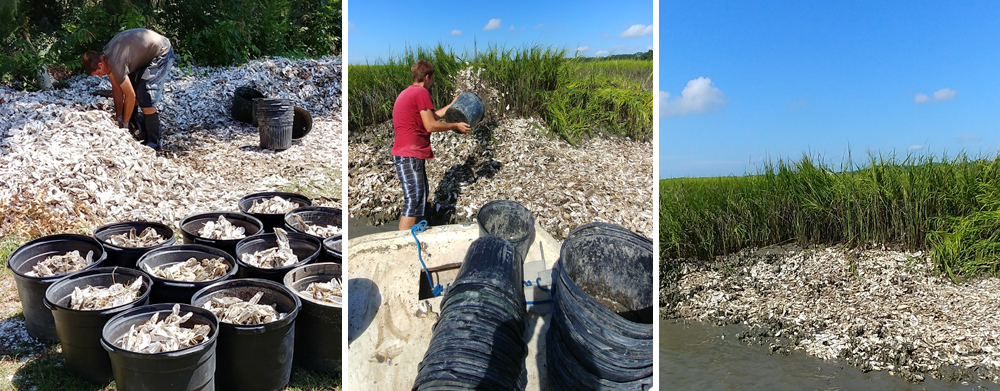 From Left: We load up buckets of dead shell that is returned from environmentally conscious customers; Oysterman deposits shell to extend a bed; Extended bed.     +++ Click image to enlarge.