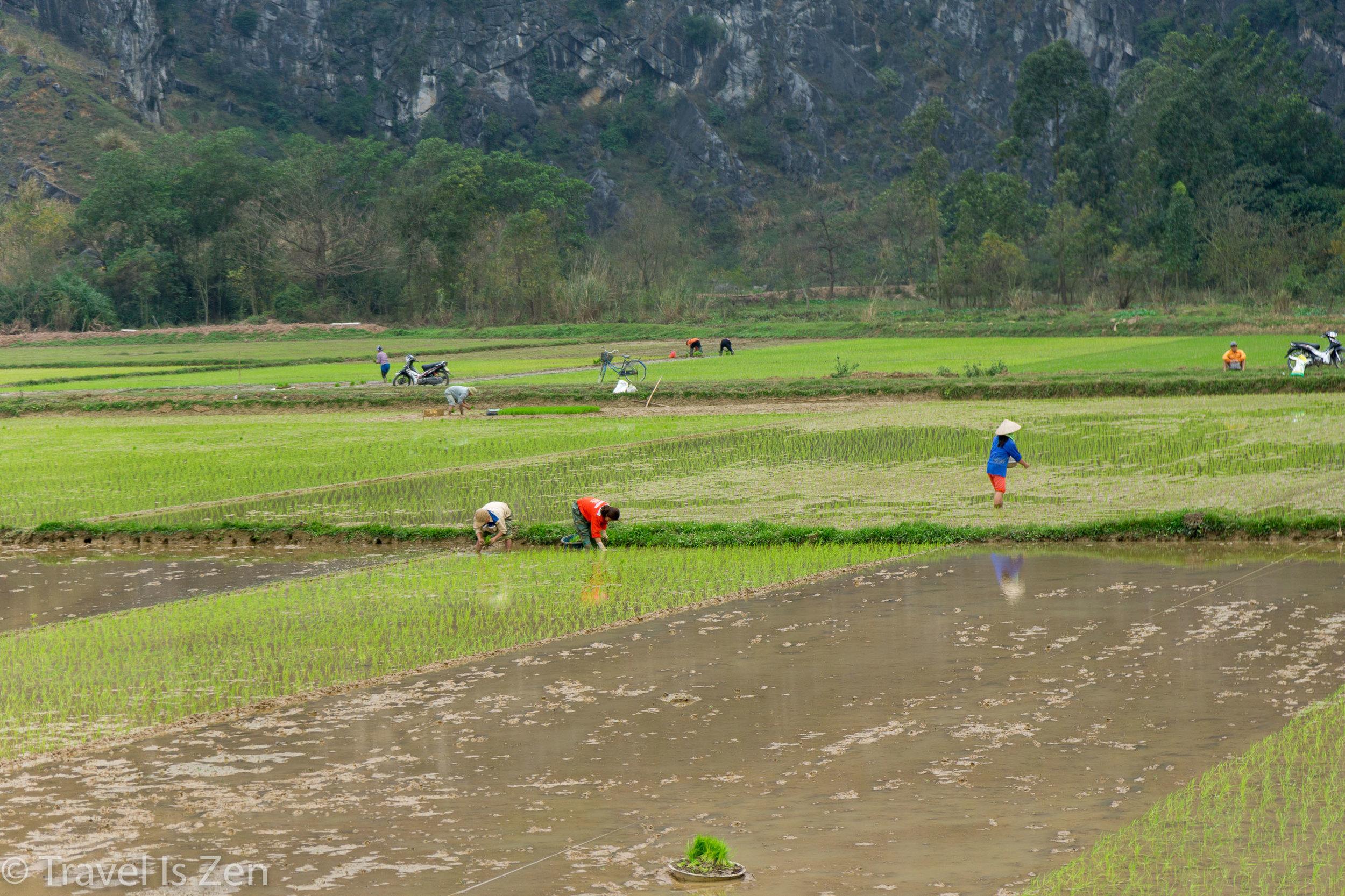 Tam Coc Ninh Binh Vietnam-44.jpg