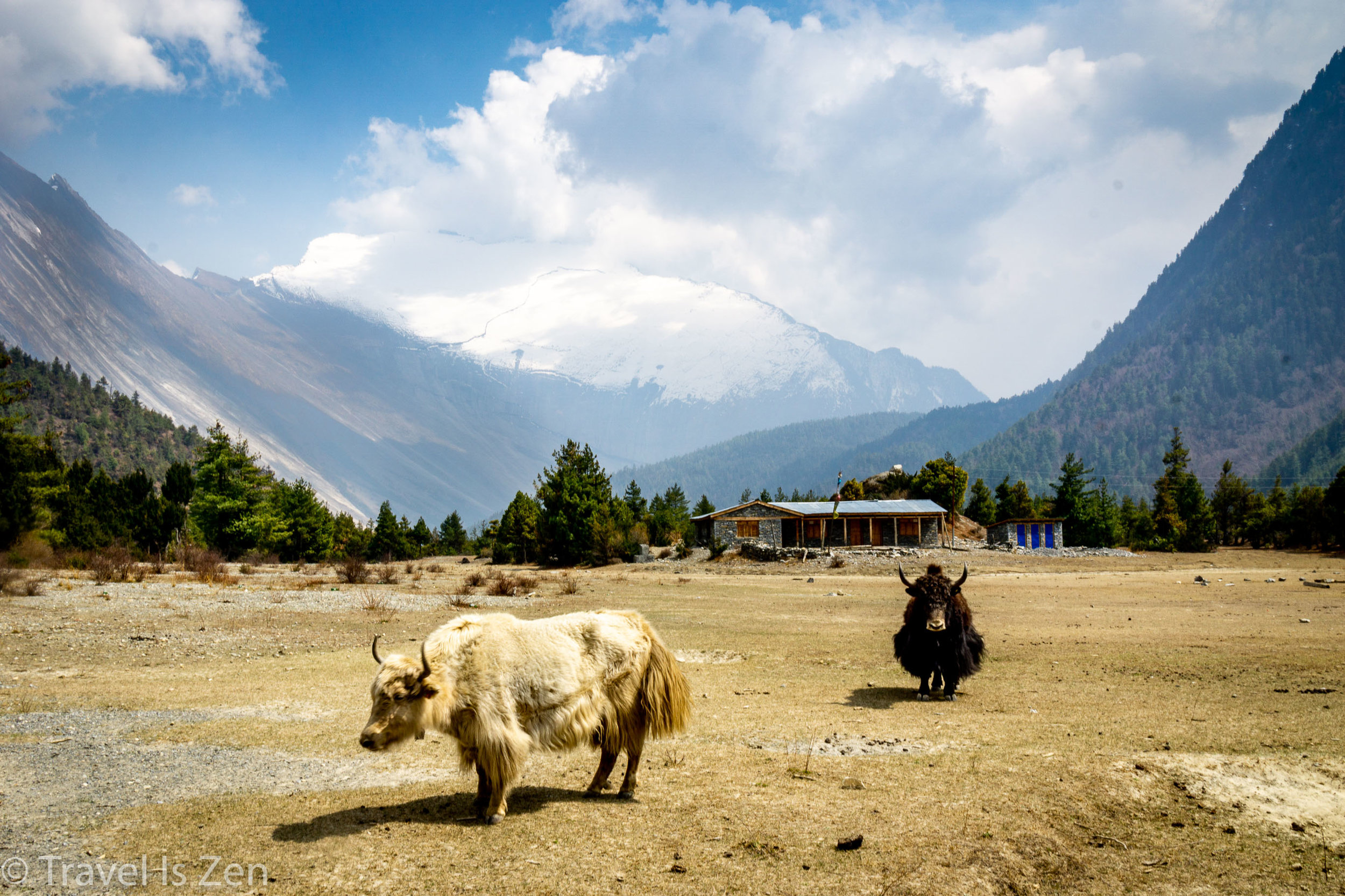 Annapurna Circuit-30.jpg