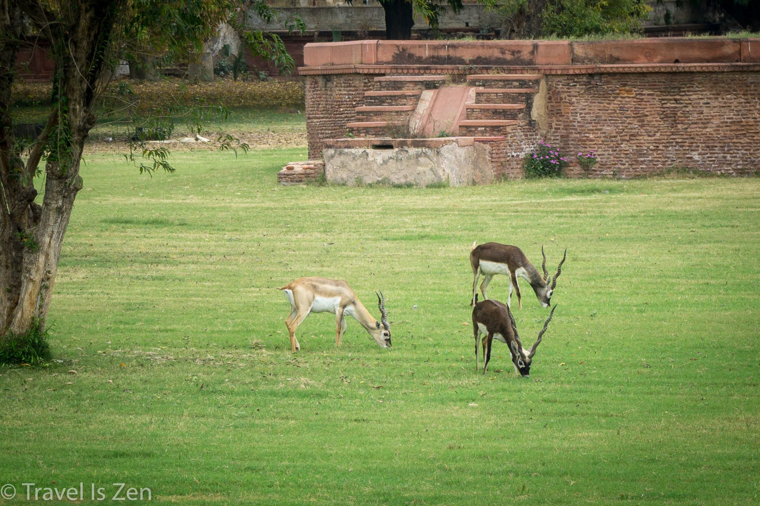 Agra-16.jpg