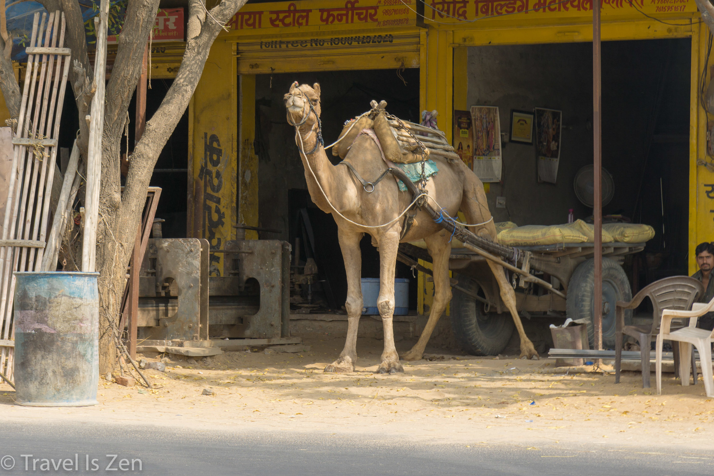 Jaipur-13.jpg
