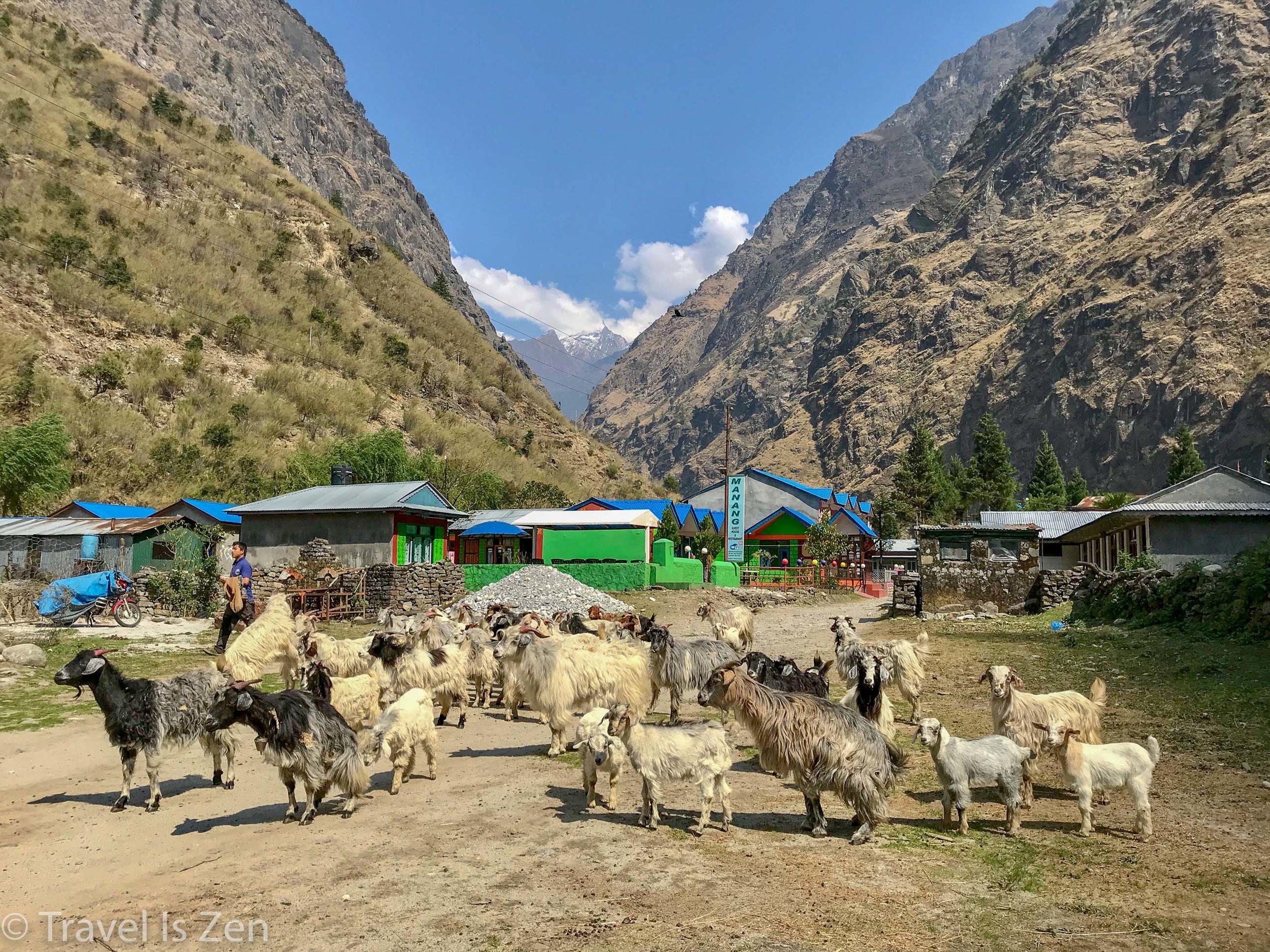 Annapurna Circuit-204.jpg
