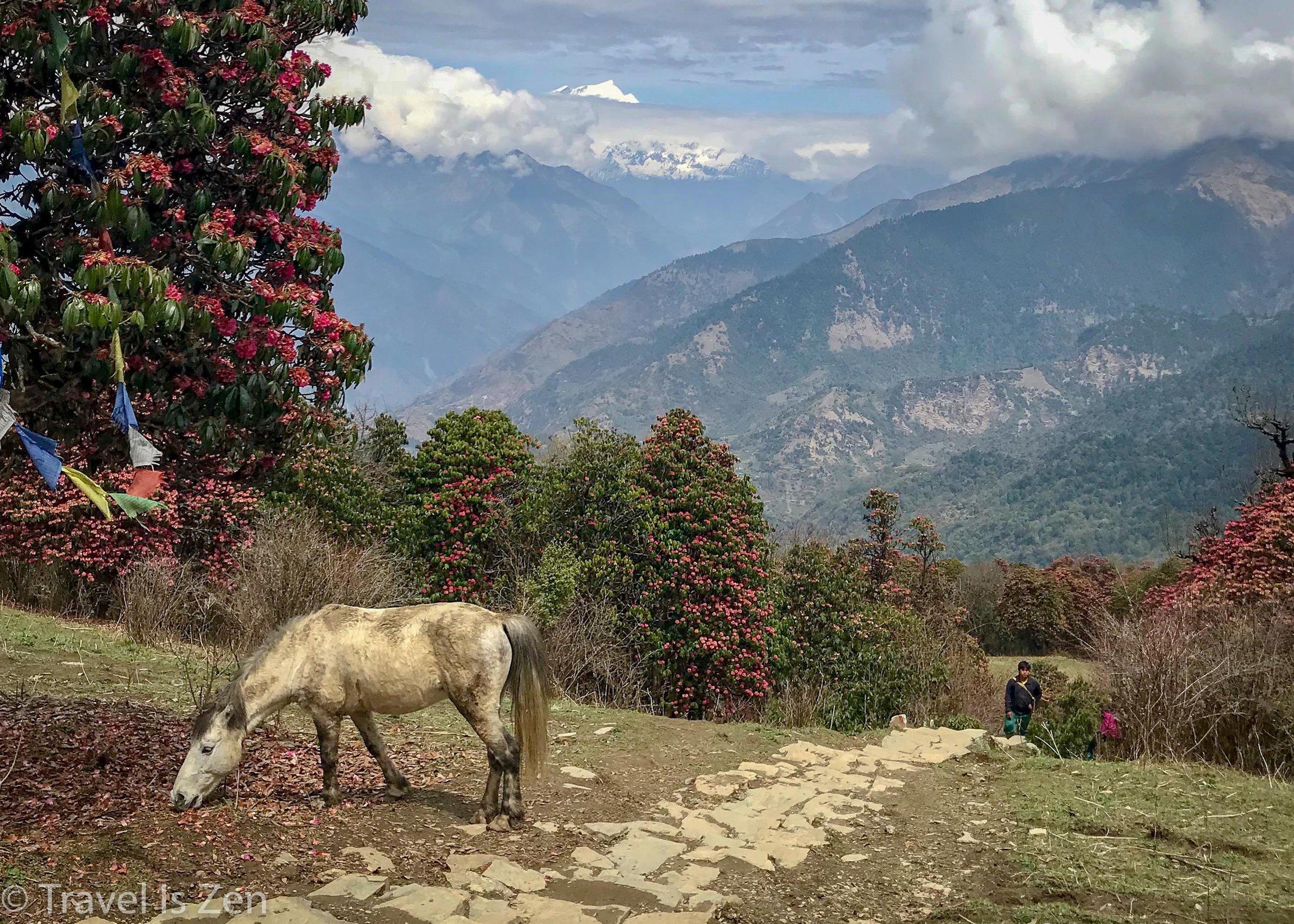 Annapurna Circuit-339.jpg