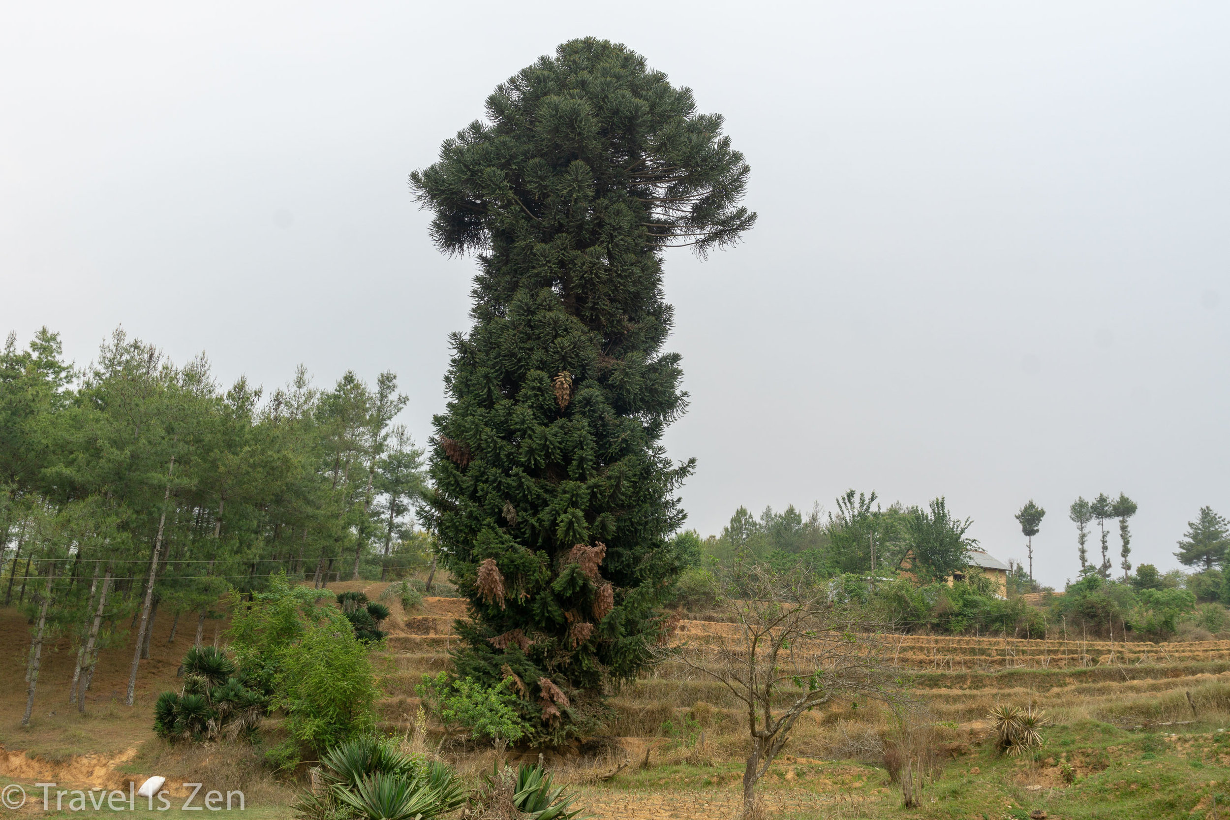 chandragiri chitlang-26.jpg