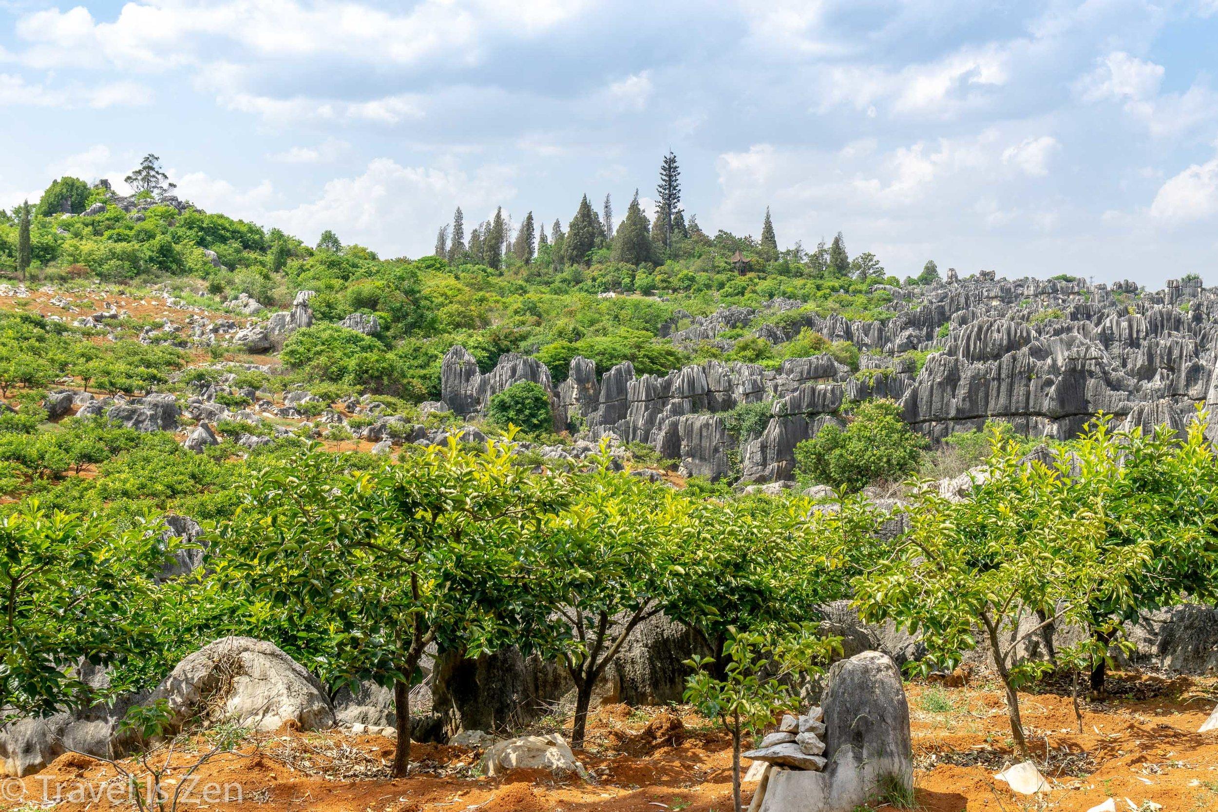 Stone Forest-12.jpg