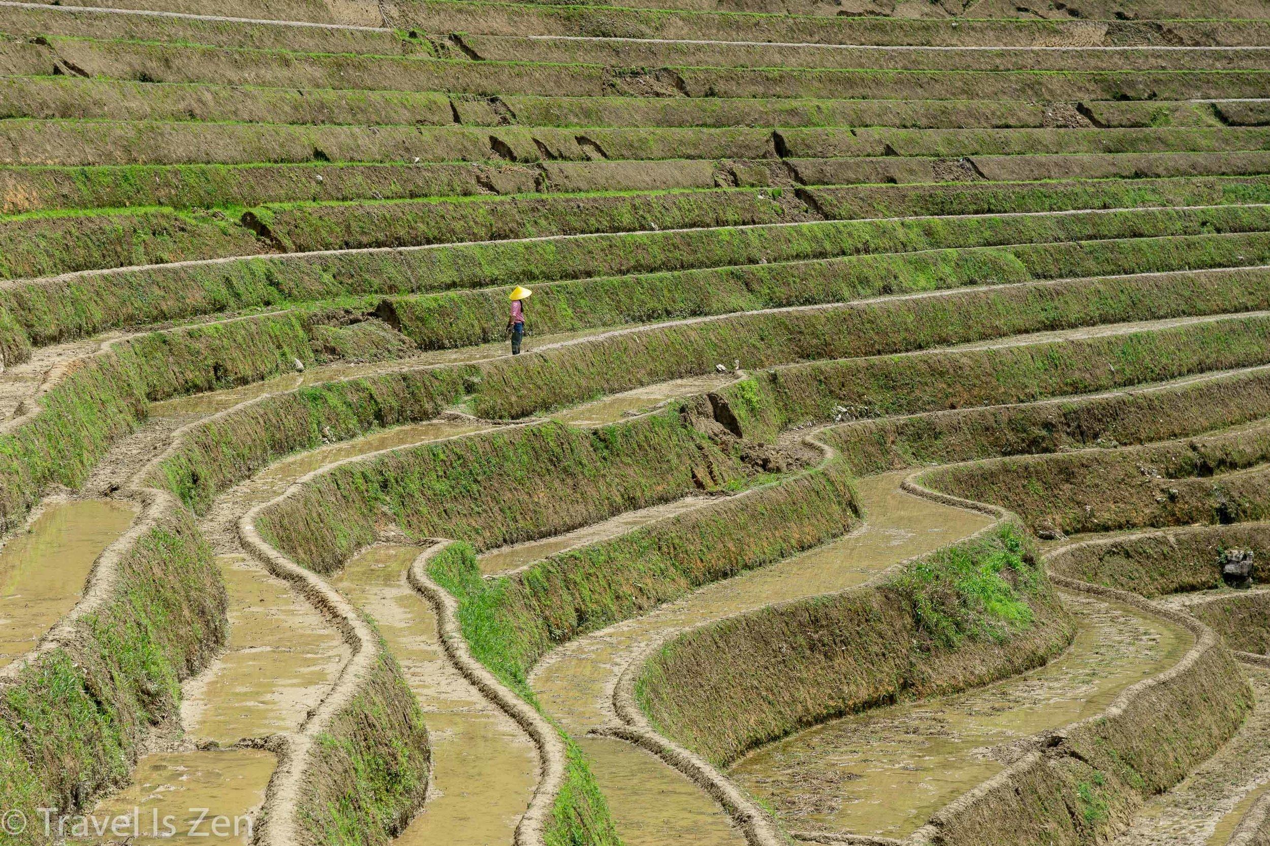 Longji Rice Terrace-2.jpg