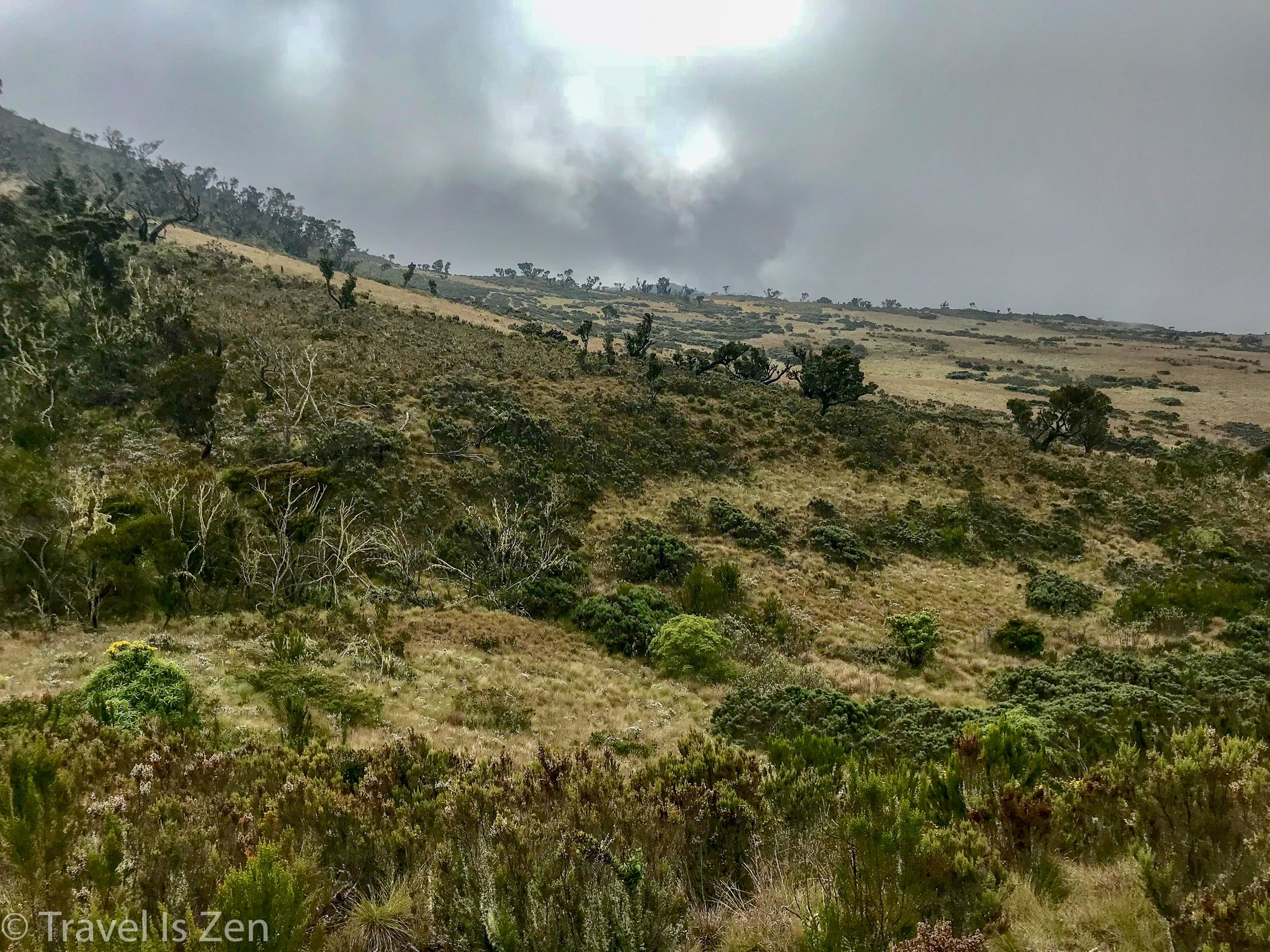 Kilimanjaro Moorlands