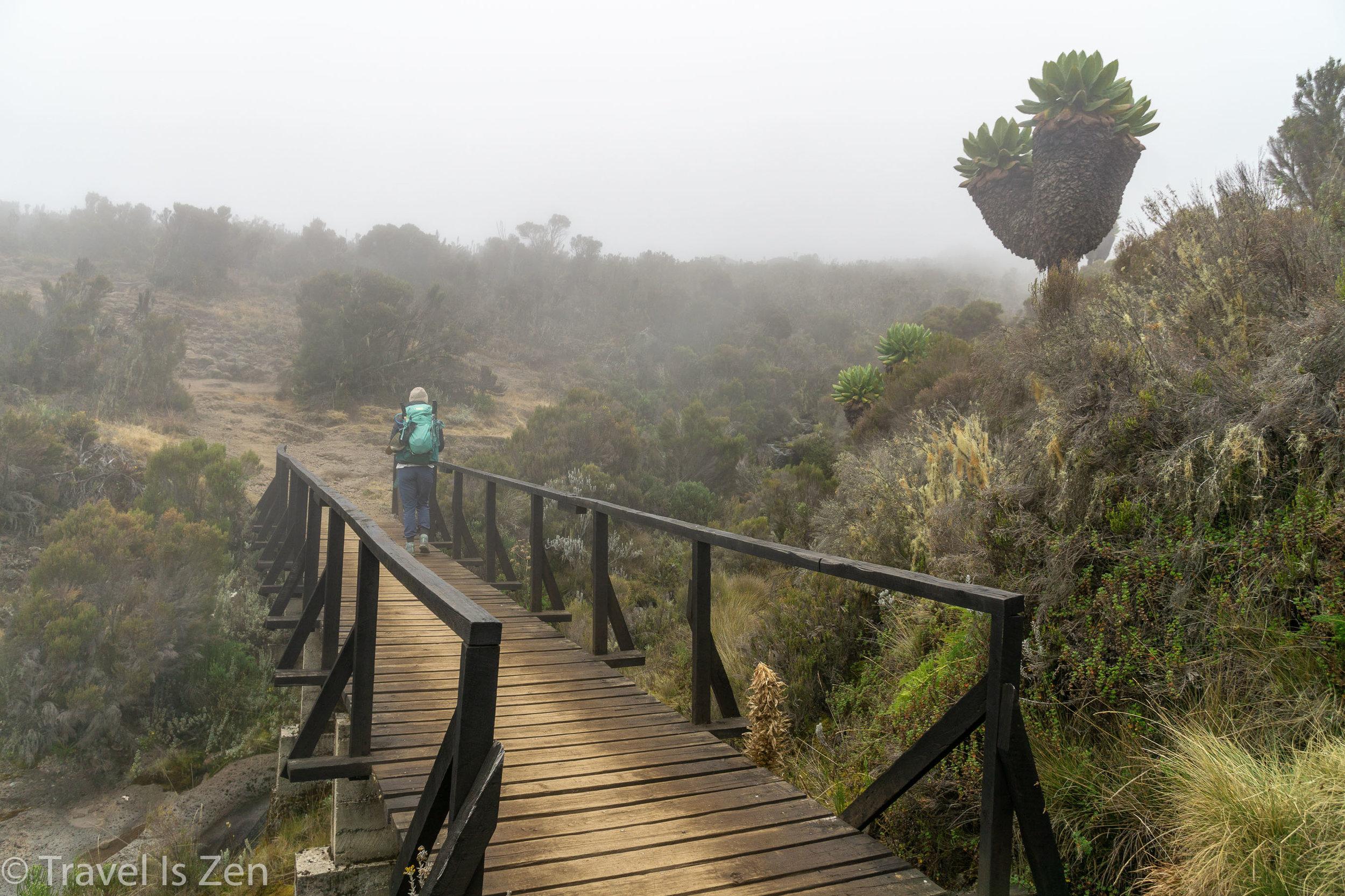 Kilimanjaro-31.jpg