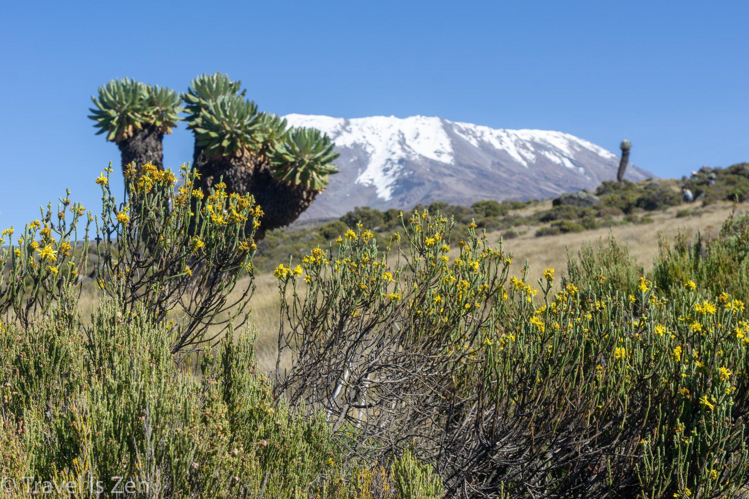 Kilimanjaro-52.jpg