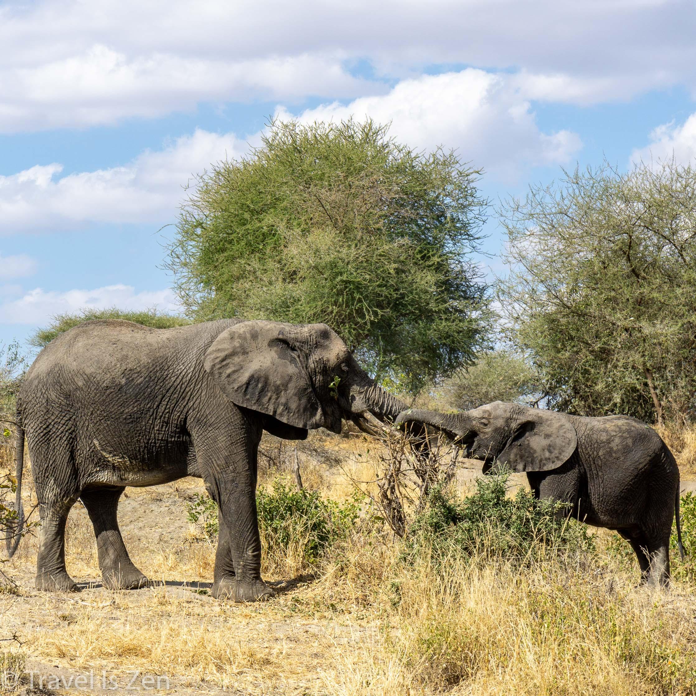 Tanzania - Moshi, Kilimanjaro, Ngorongoro Crater, Tarangire National Park, Lake Manyara