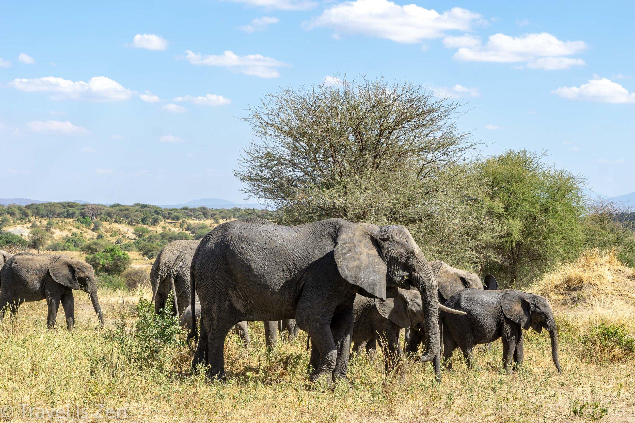 Tanzania Safari-1.jpg