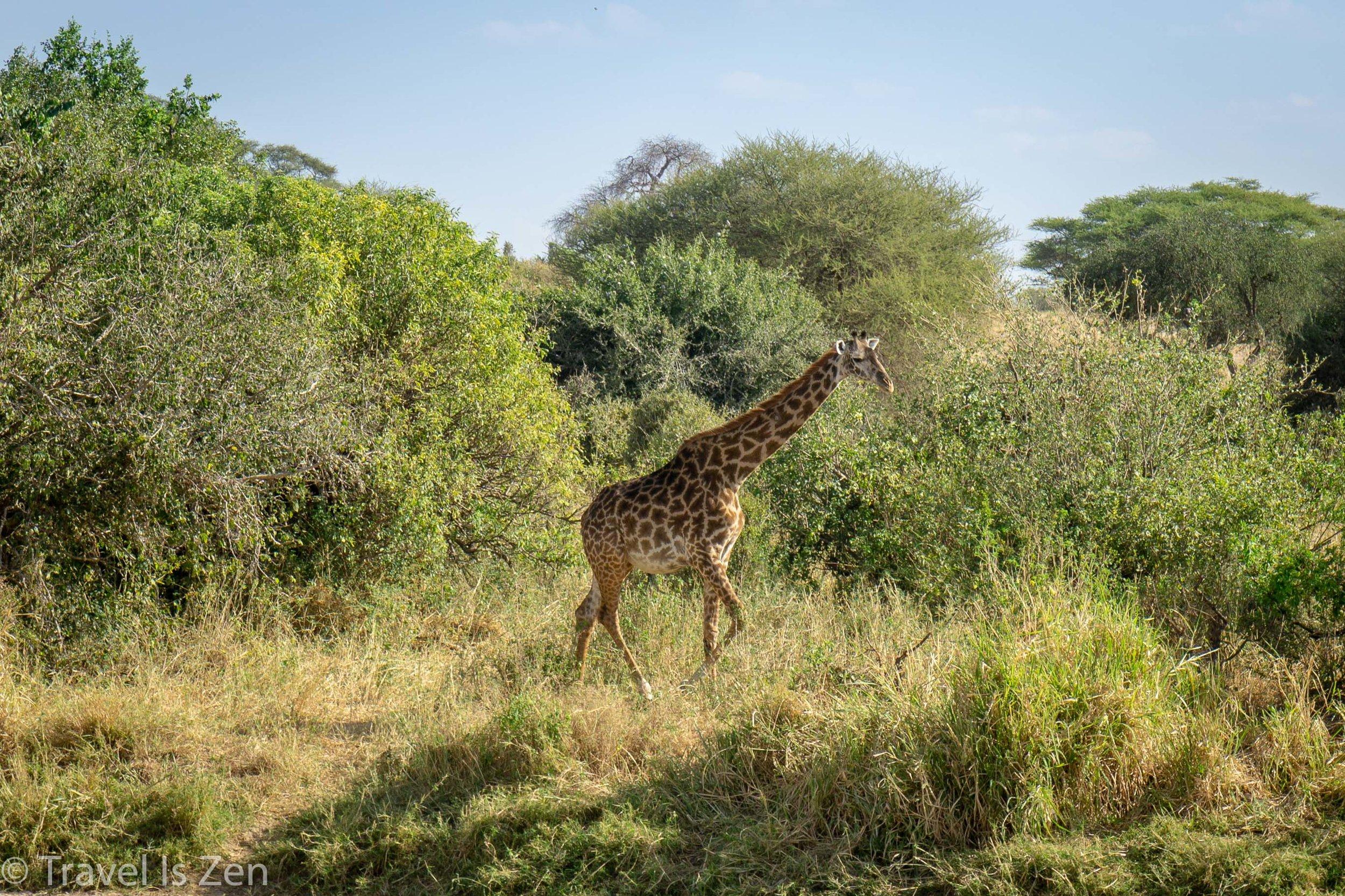 Tanzania Safari-5.jpg