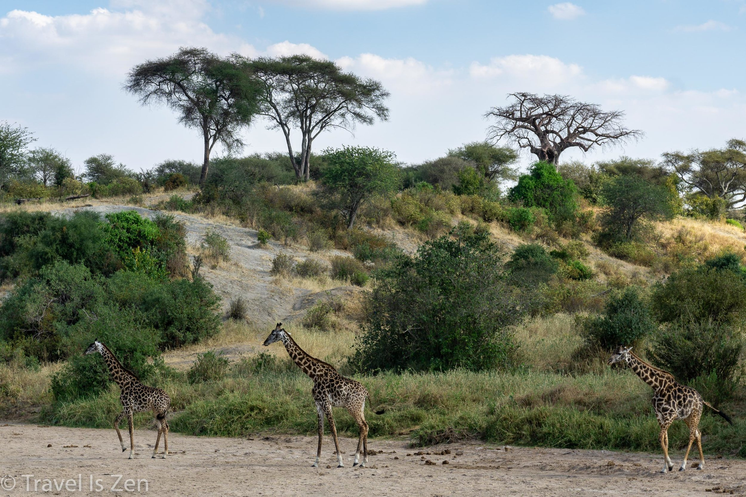 Tanzania Safari-6.jpg