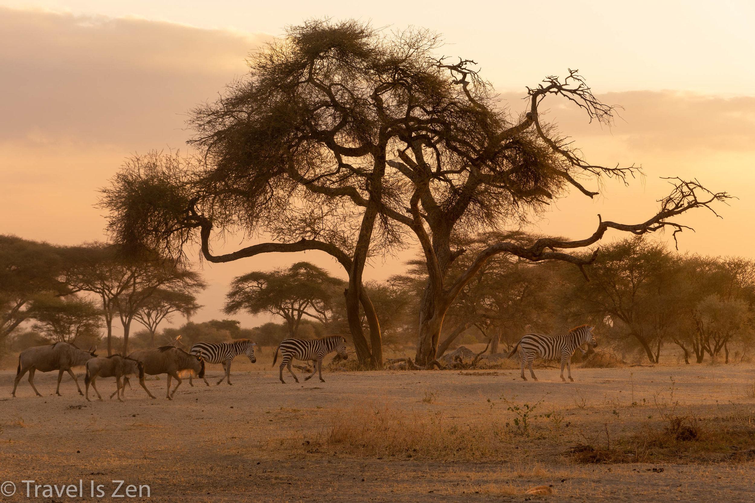 Tanzania Safari-14.jpg